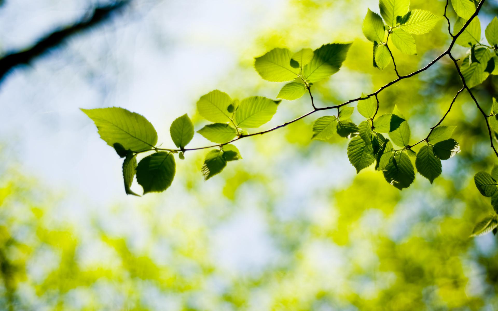 обои зеленые весна