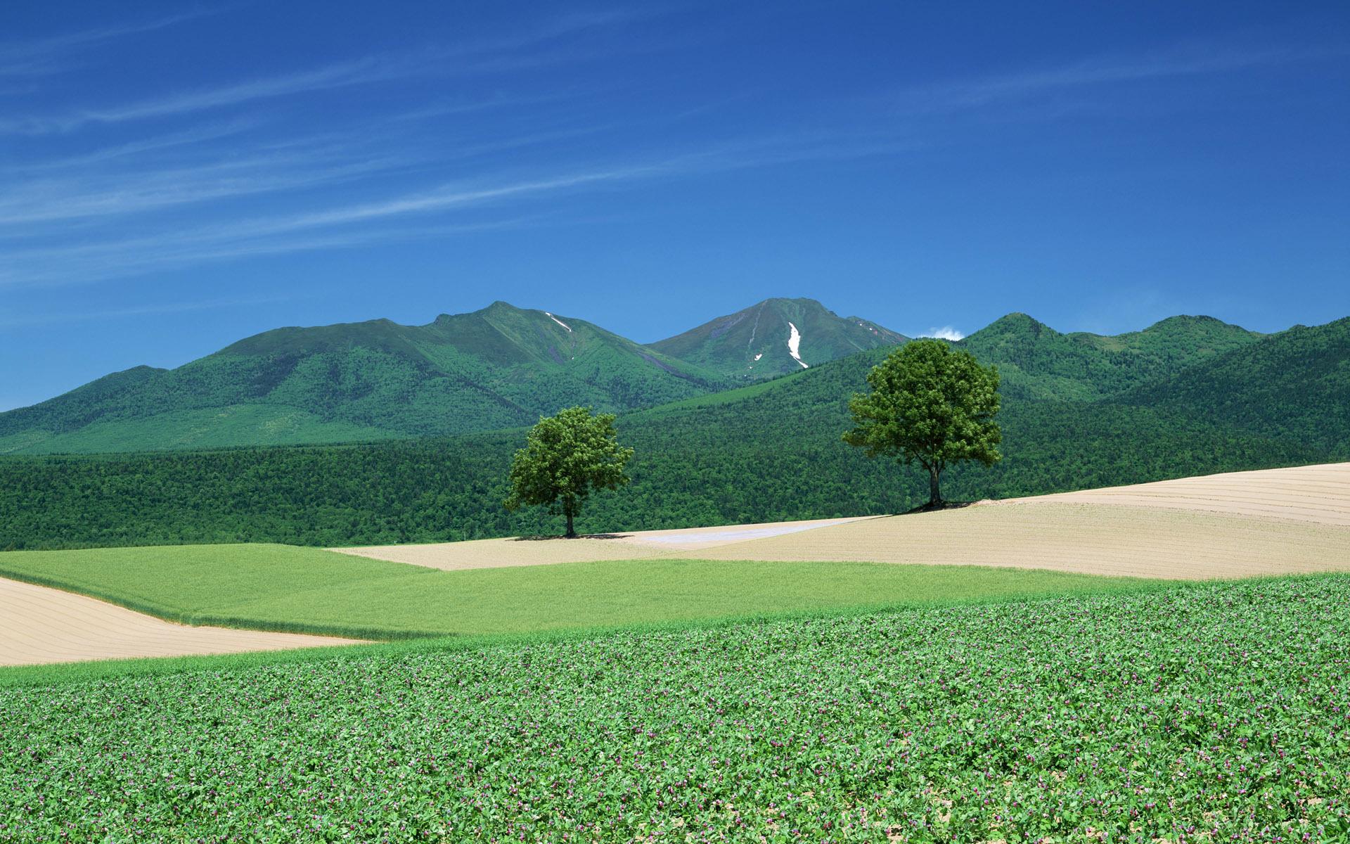 Зеленое поле возле горы  № 1077821 бесплатно