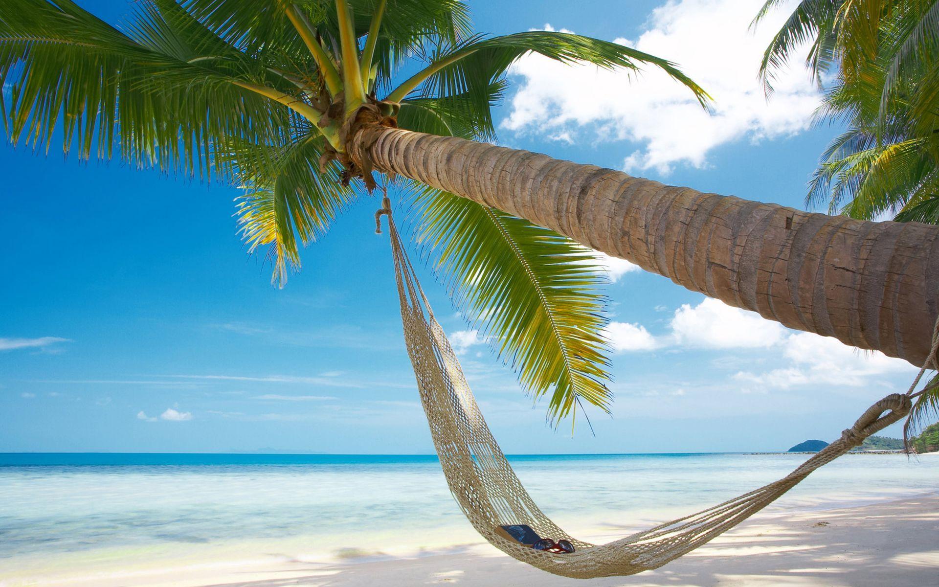 Картинки пляжные пальмами, летием свадьбы