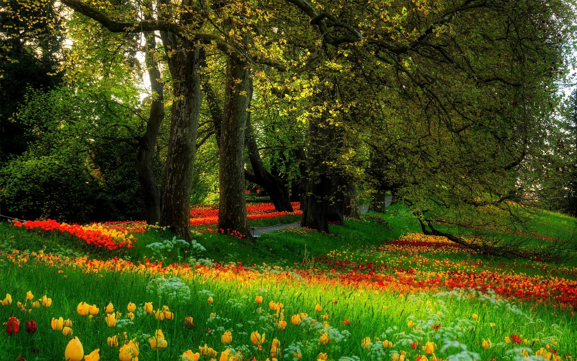 луг сад дворик трава  № 2691649 бесплатно