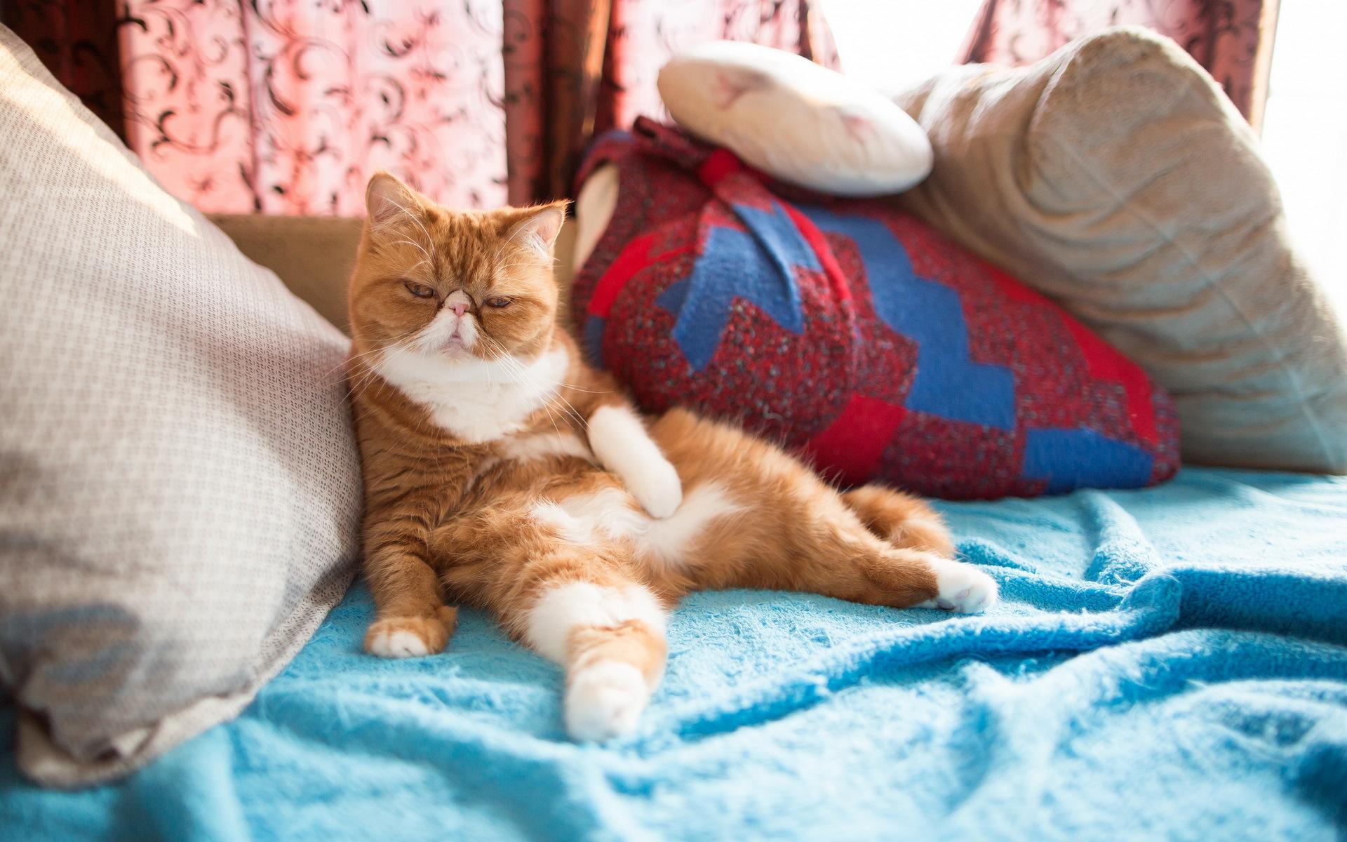 чтобы ваша картинка кошка уютно спит вообще
