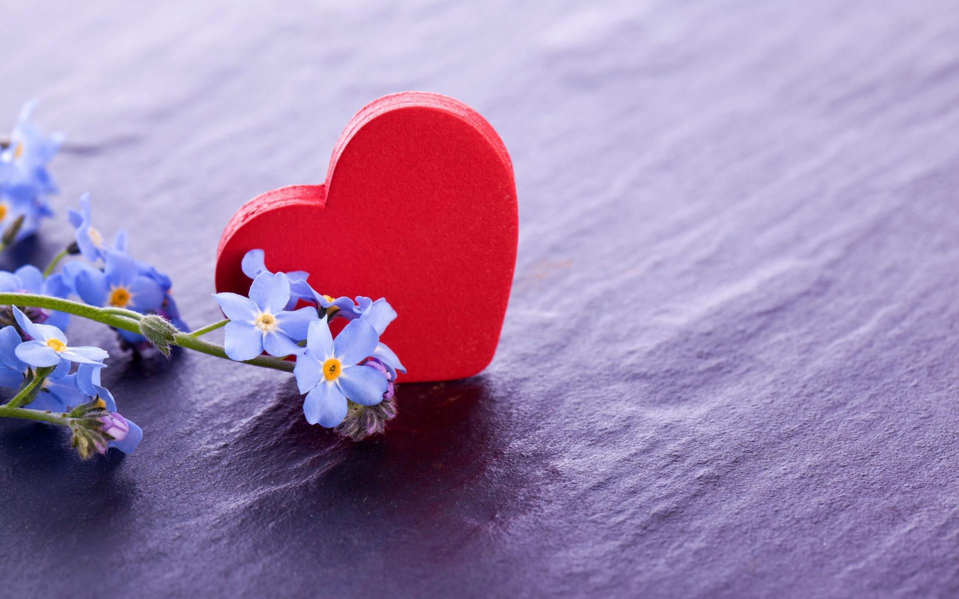 Сну прикольные, картинки любовь цветы