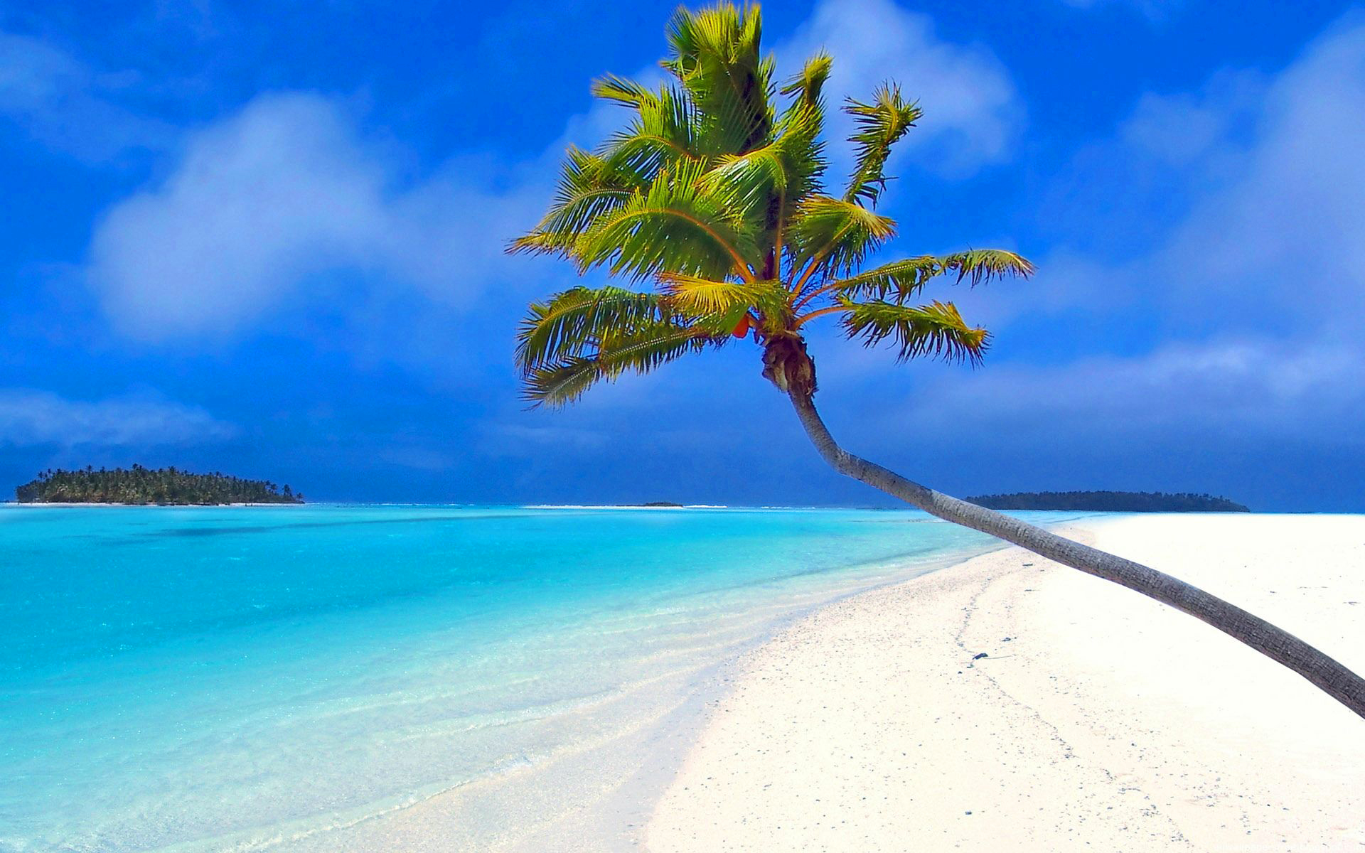 берег океана с пальмами фото фотошкола архангельске