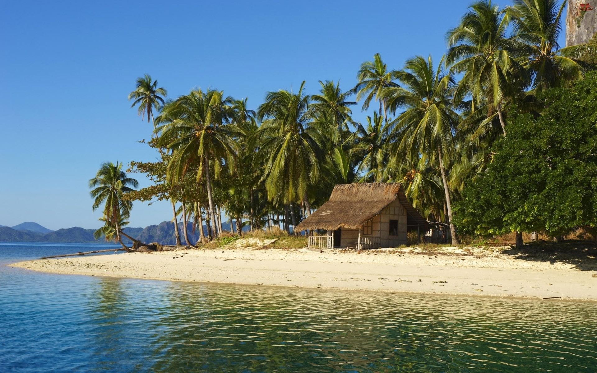 исхода картинки остров с пальмой и хижиной отметить, что значительно