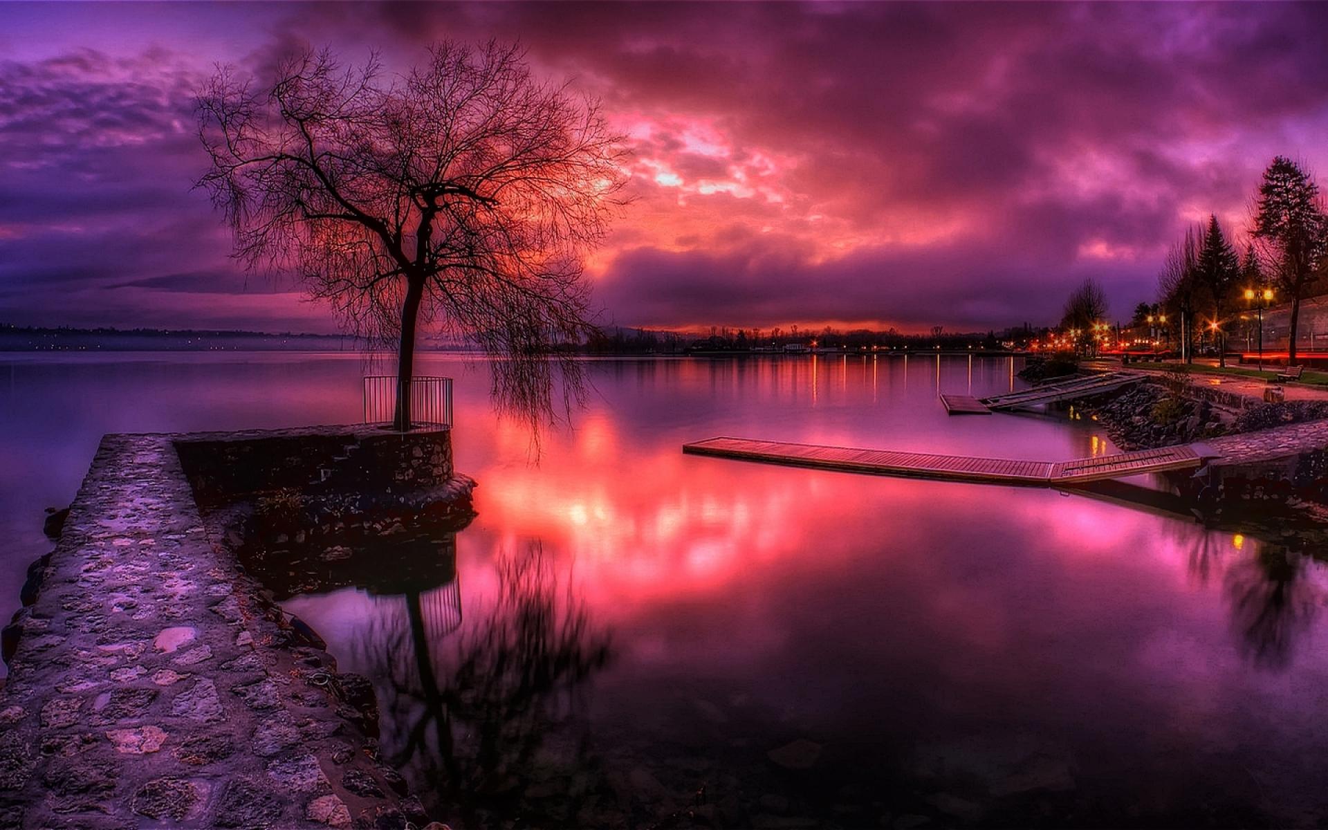 картинки фиолетовый пейзаж санитаров леса деревьев
