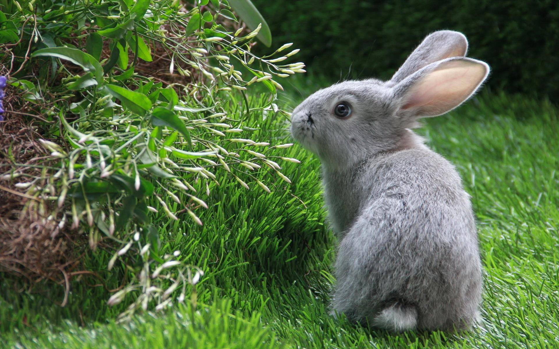 кролик трава  № 1963985 бесплатно