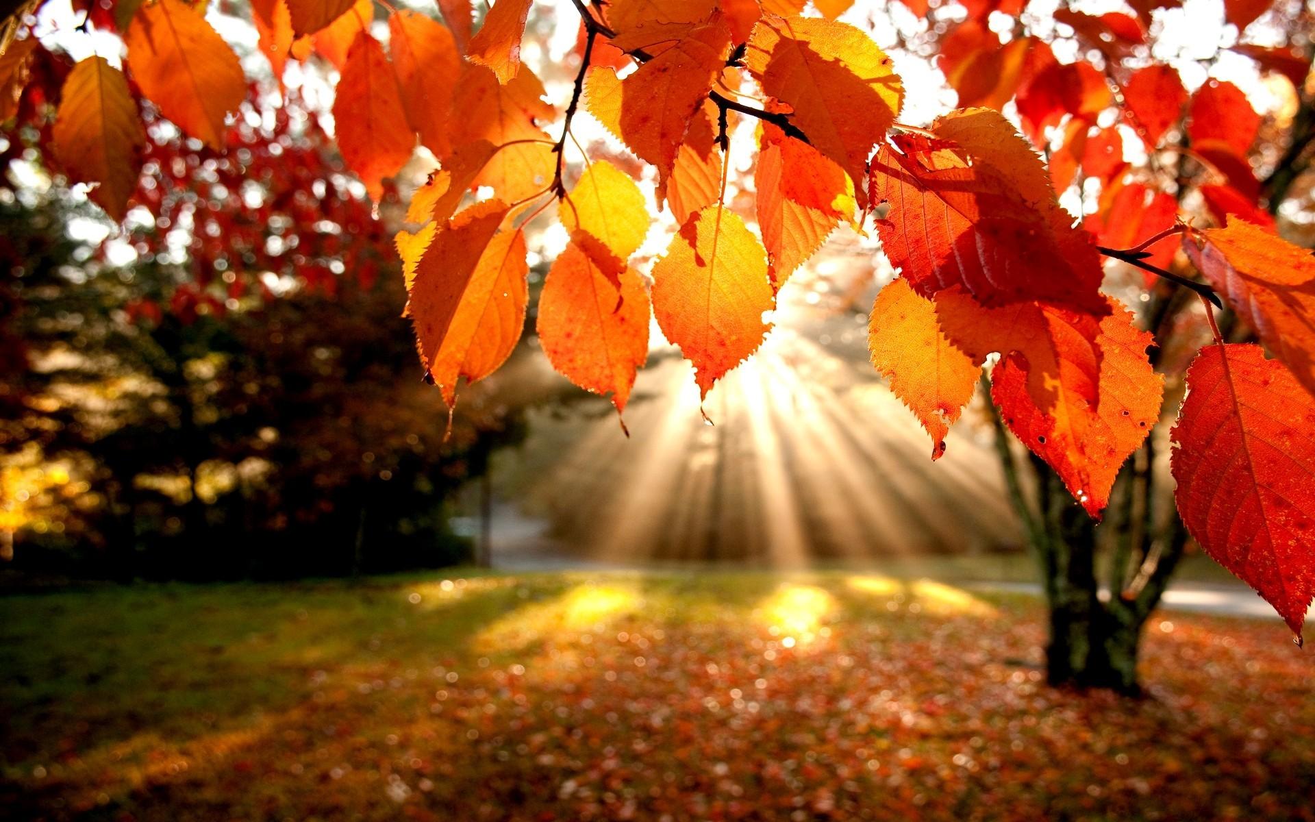 солнечная осень  № 44214 без смс