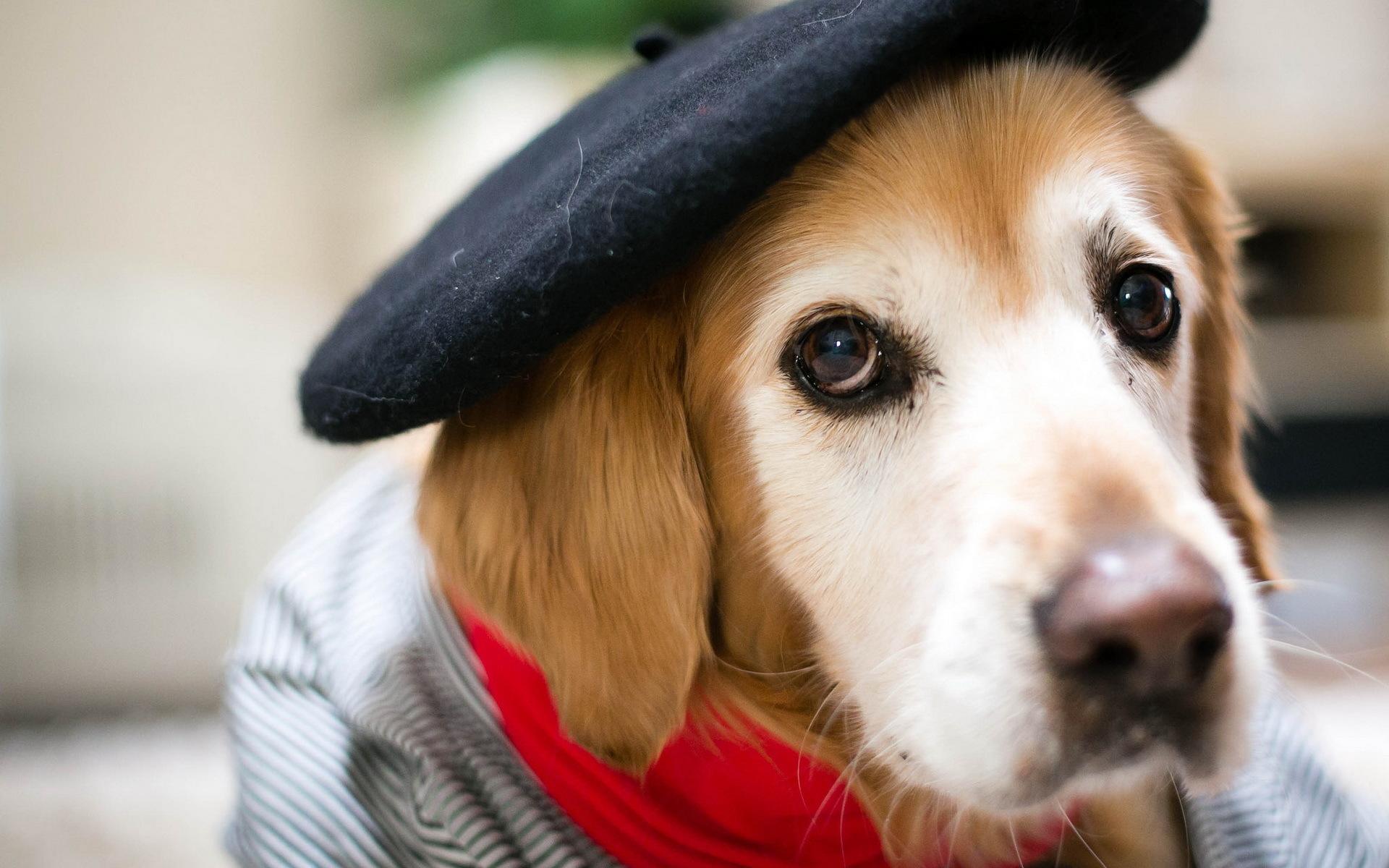 Собаки картинки фотографии, картинки