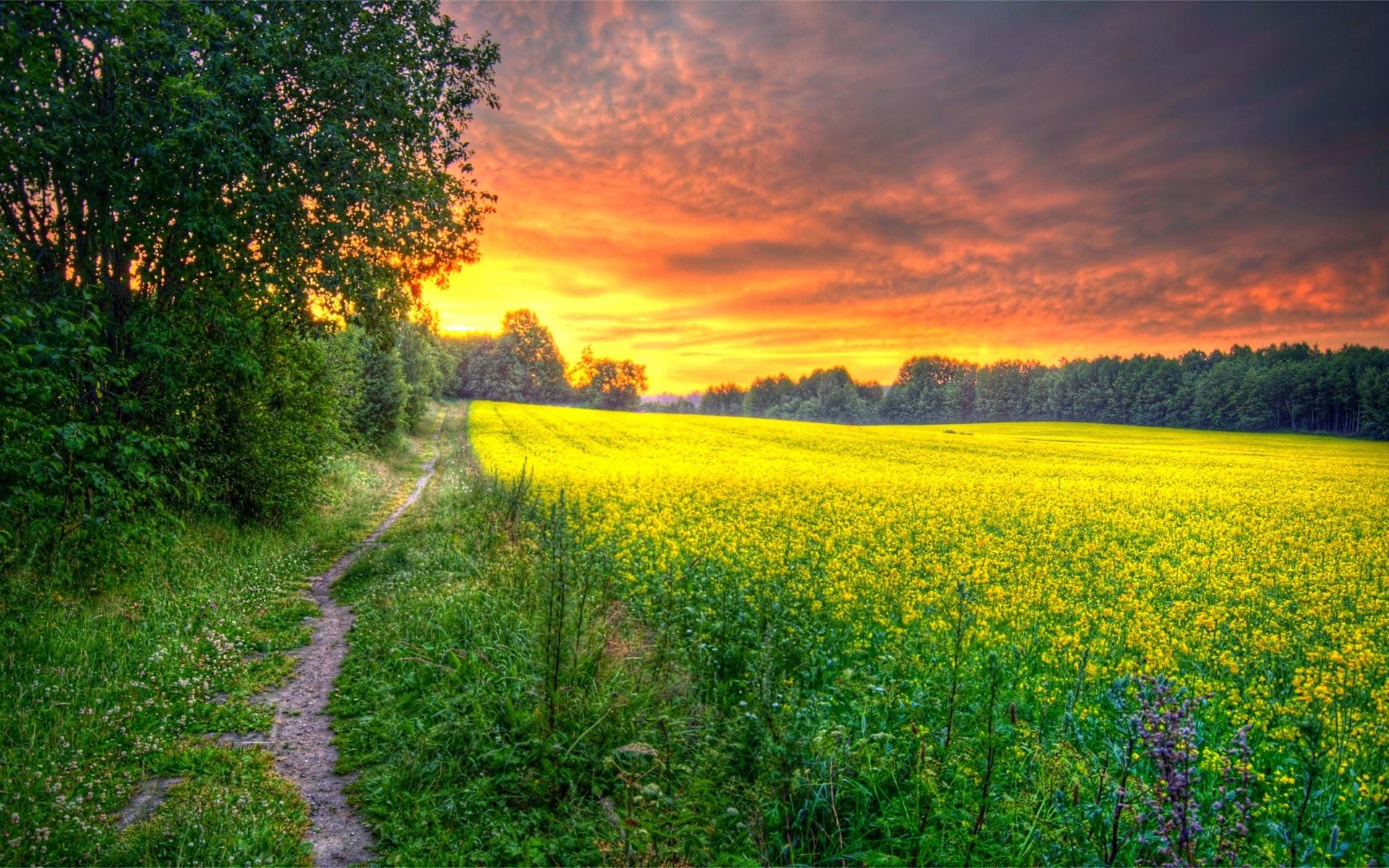 Восход солнца на окраине леса  № 1409470  скачать