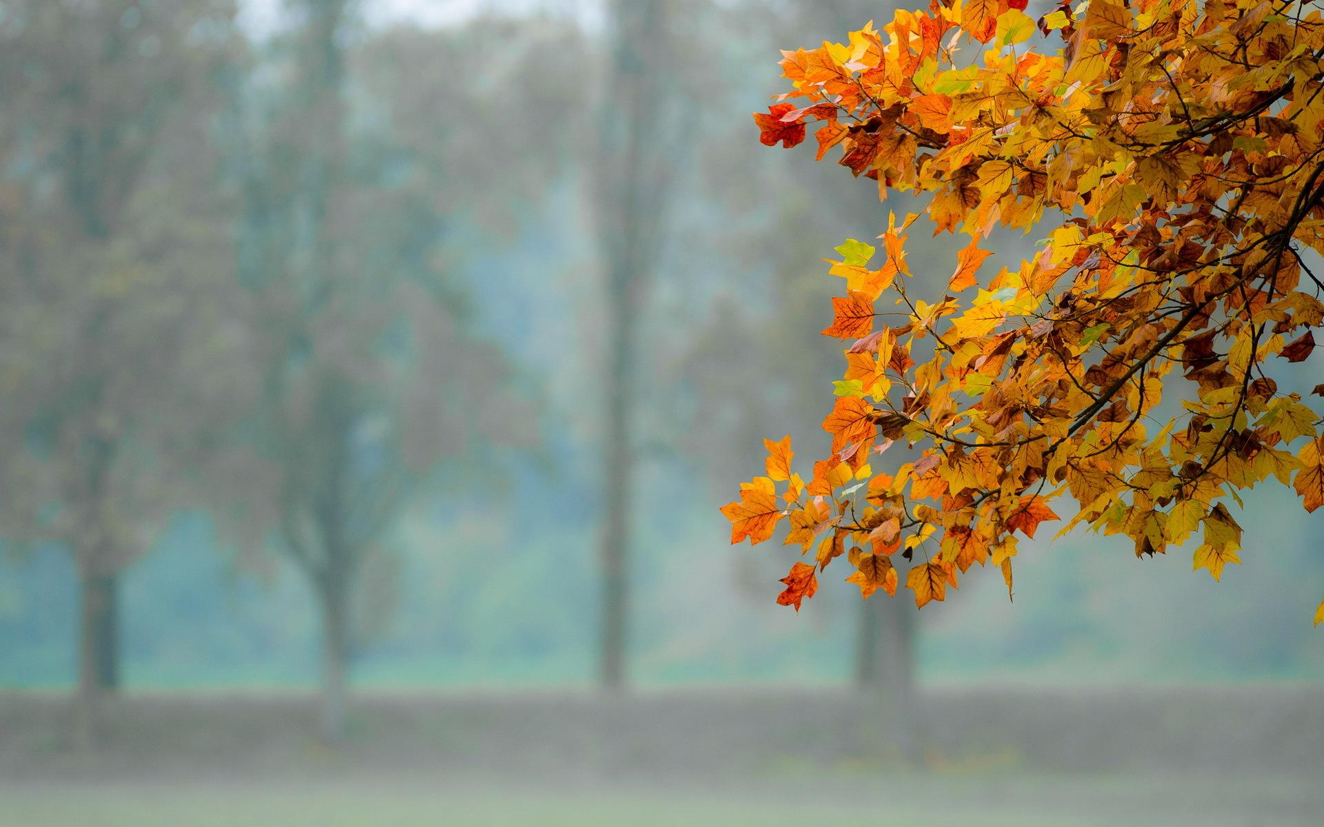 природа лист осень  № 543290 загрузить
