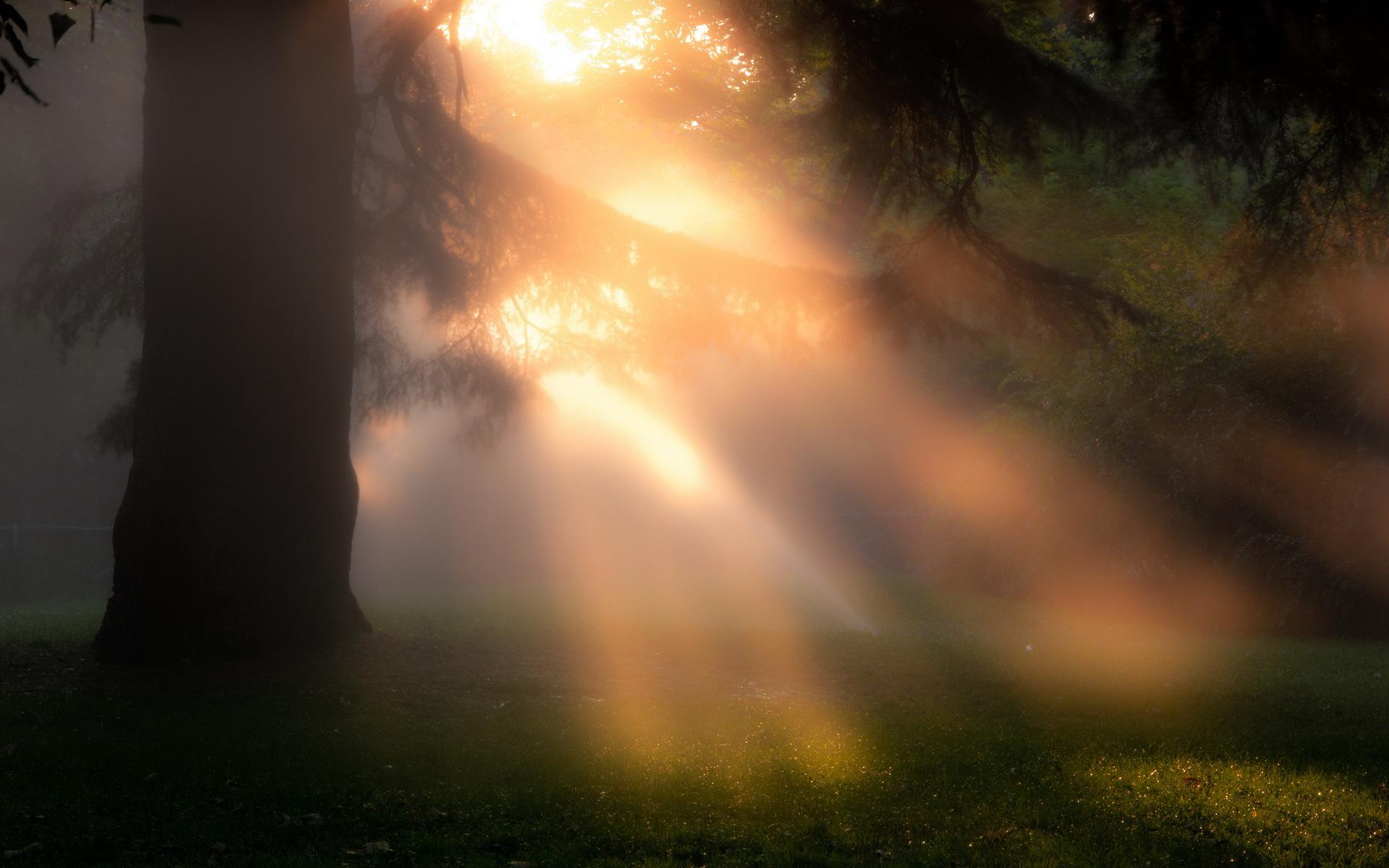 Фото утренние лучи солнца сквозь туман