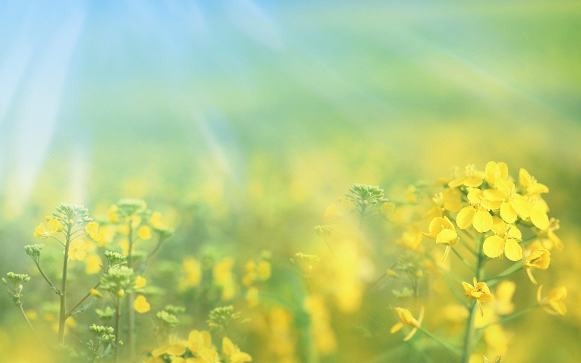 Желто-зеленые листки  № 3114905  скачать