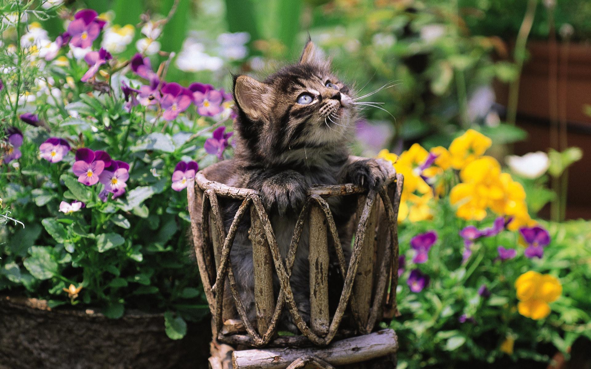кошка цветы красиво фотография майли
