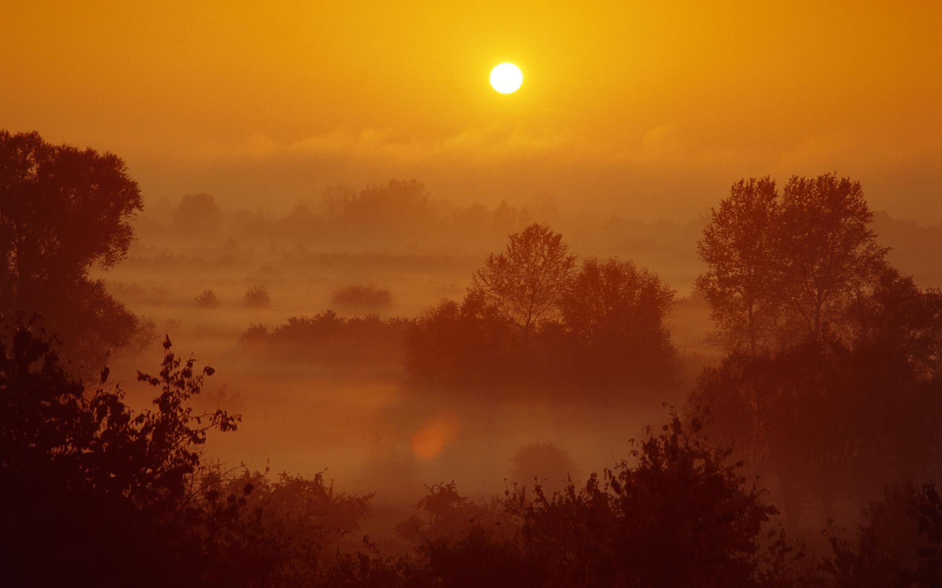 Восход солнца на окраине леса  № 1409496 без смс