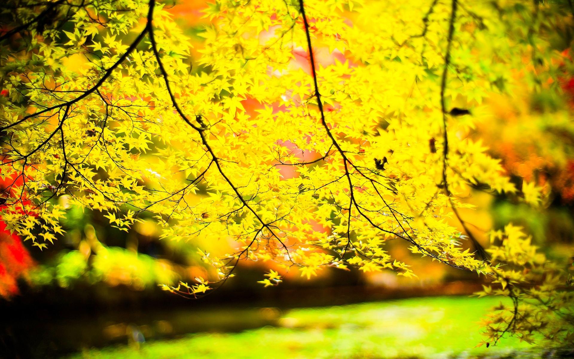 деревья листва осень солнце  № 3191719 бесплатно