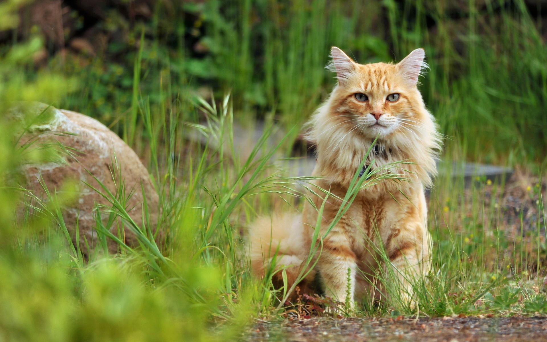 Обои картинки фото кошка взгляд