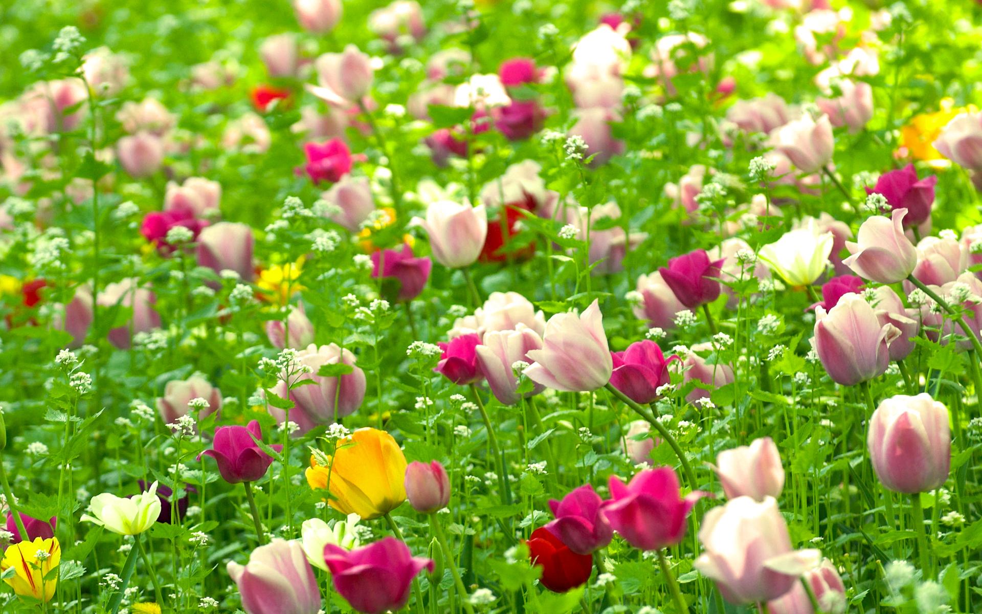 дальнобойщиков красивые цветы в природе широкоформатное фото чтобы каждое исполнившееся