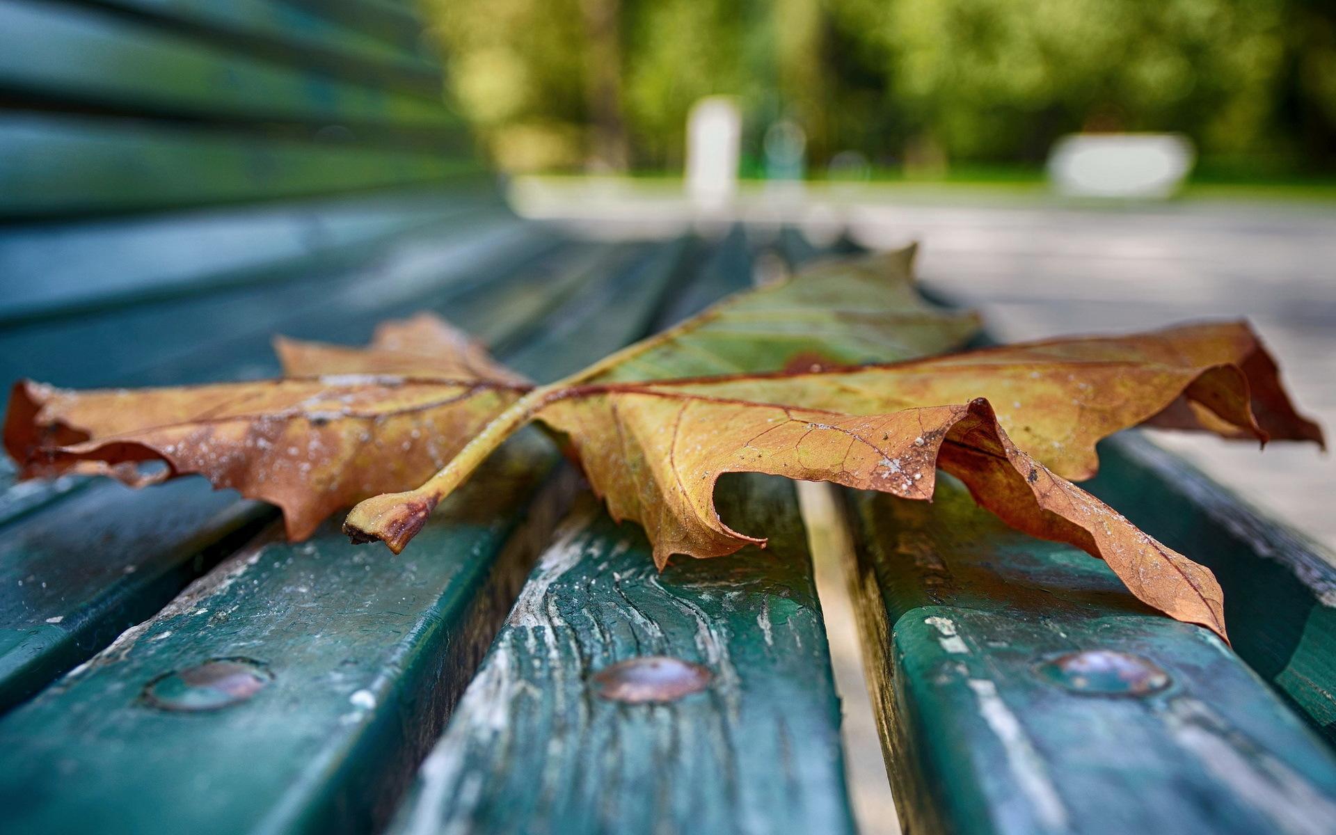 Осень листья лавка стол  № 3187392 без смс