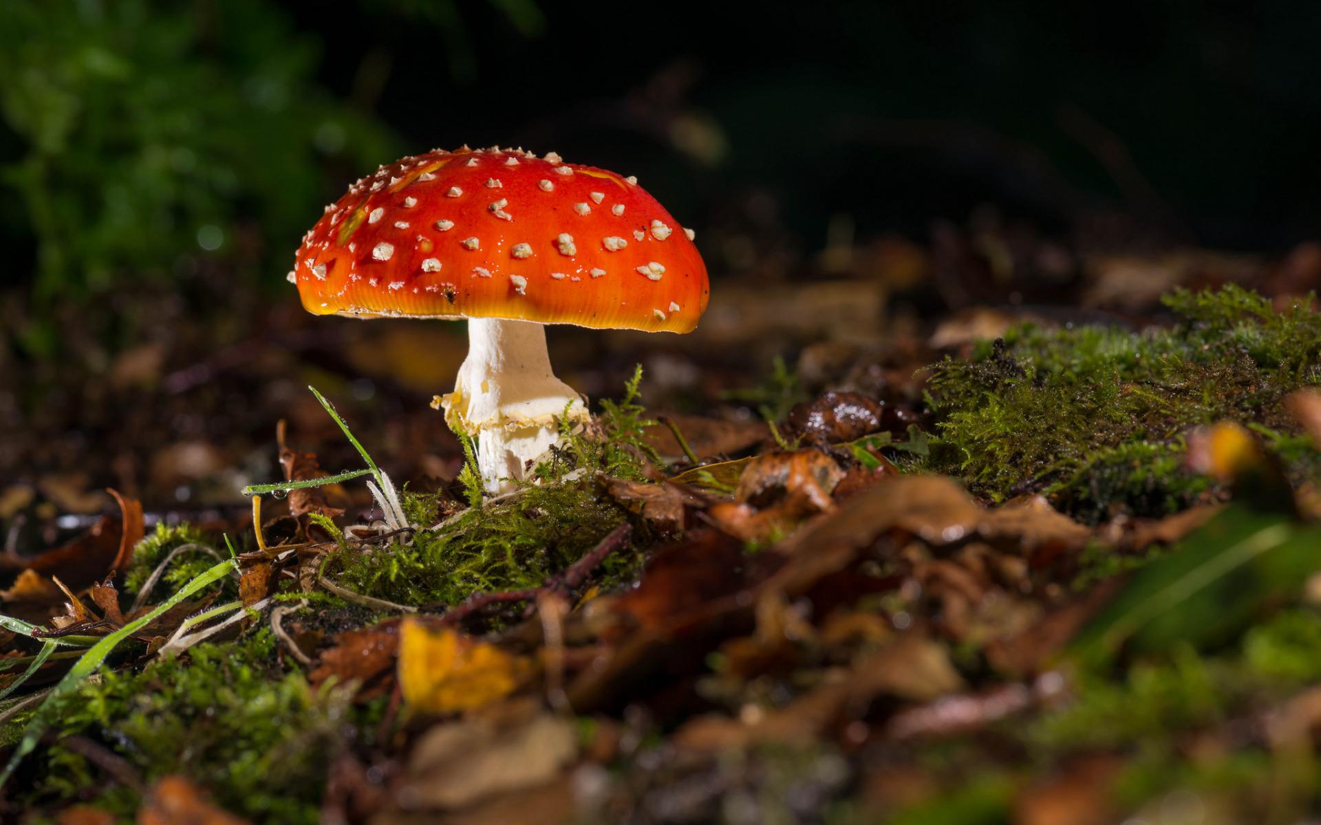 Фото различных грибов