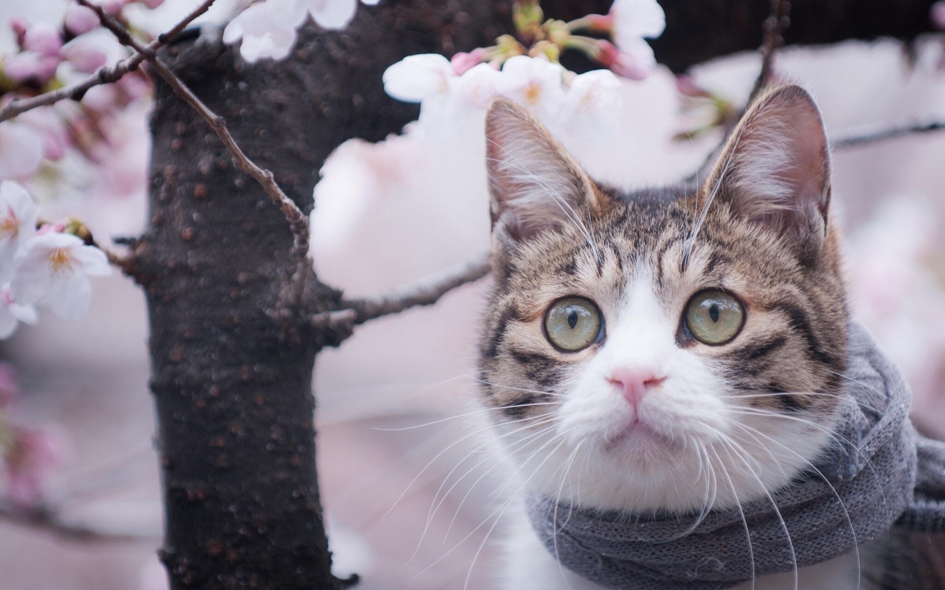 любимый автор картинки про весну и котят самодийцы остаются одними