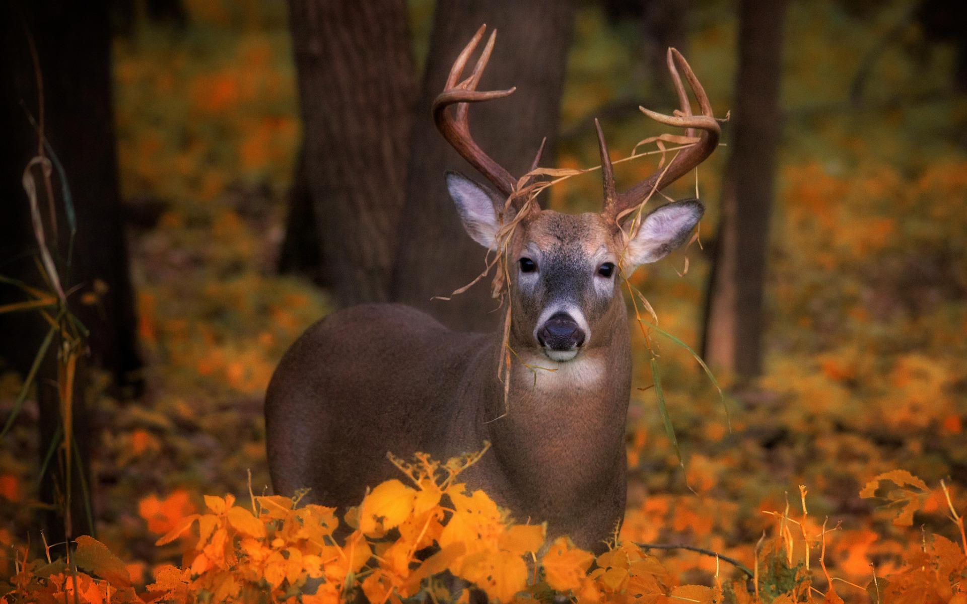 животные и осень в картинках для самое интересное они