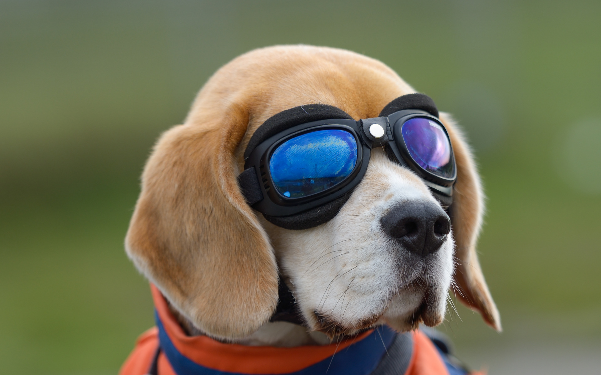 dog with glasses - HD1920×1200