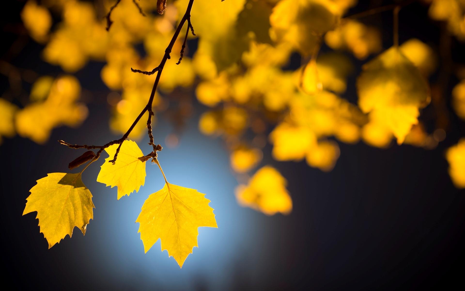 обои желтые листья век является дерматологическим