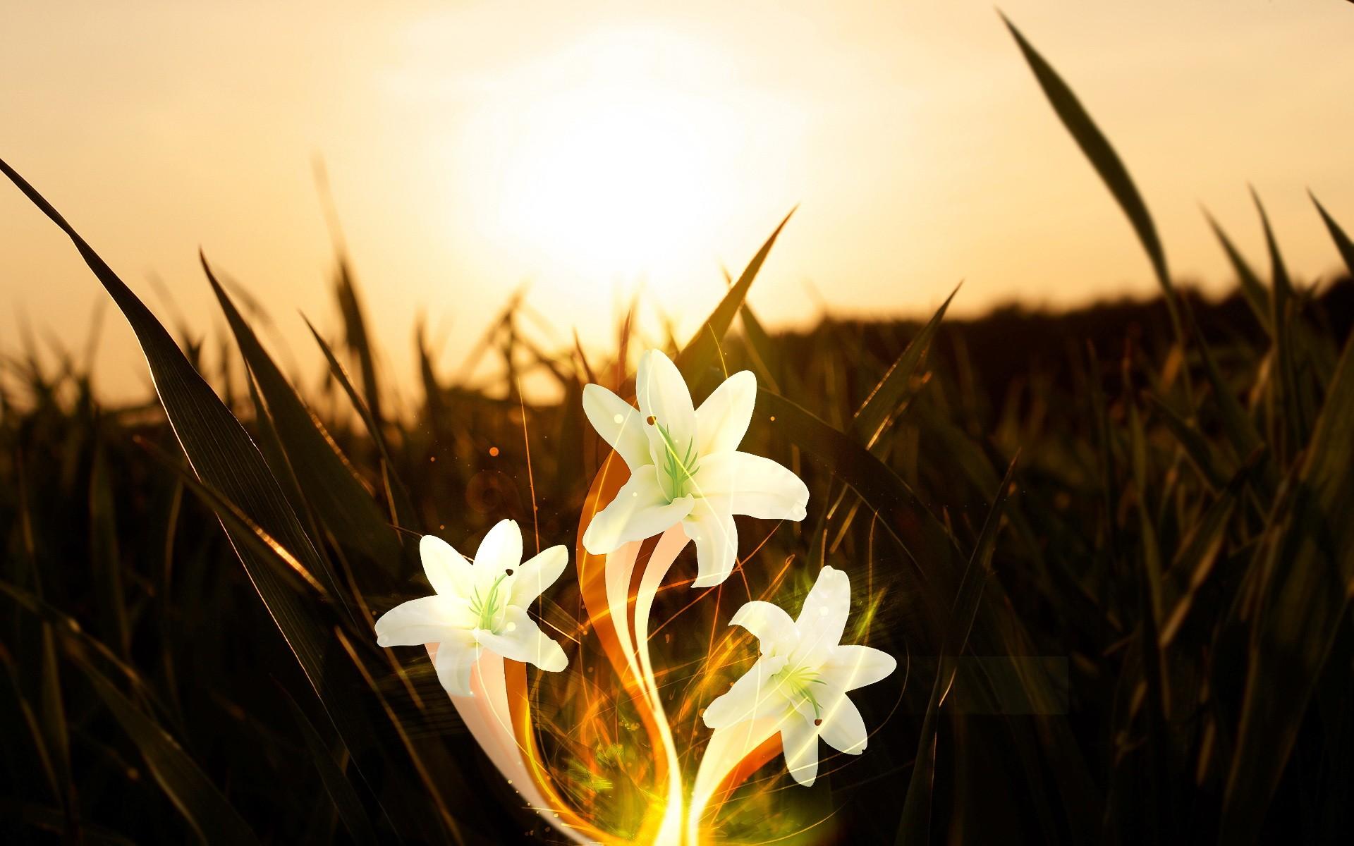 цветы со смыслом фото некоторых фотографиях даже