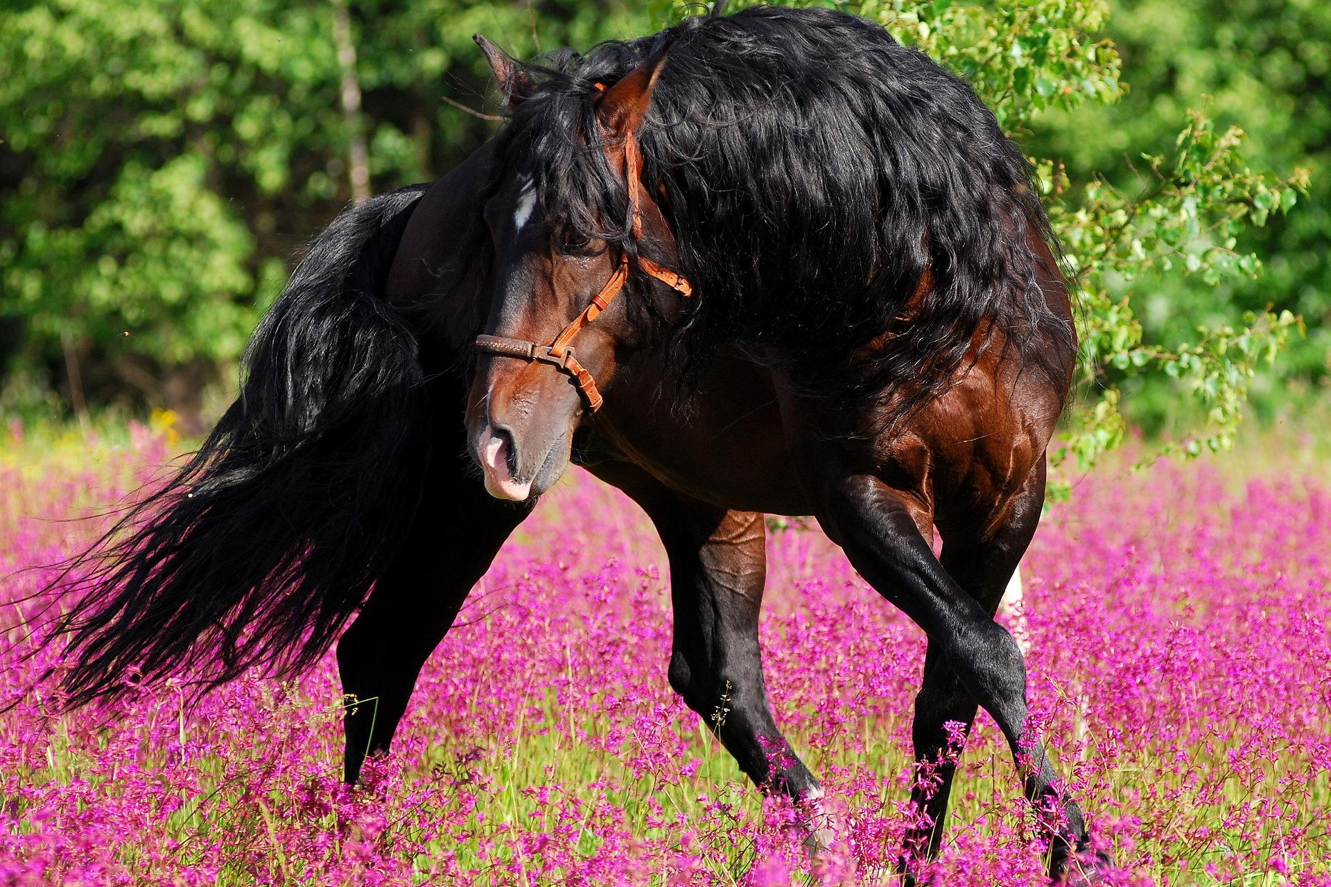 Лошадь в цветах  № 3117211  скачать