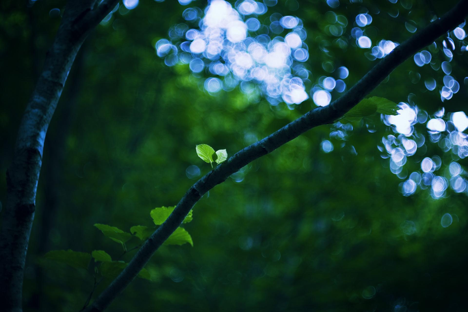 лес зелень ветви  № 2801065 бесплатно