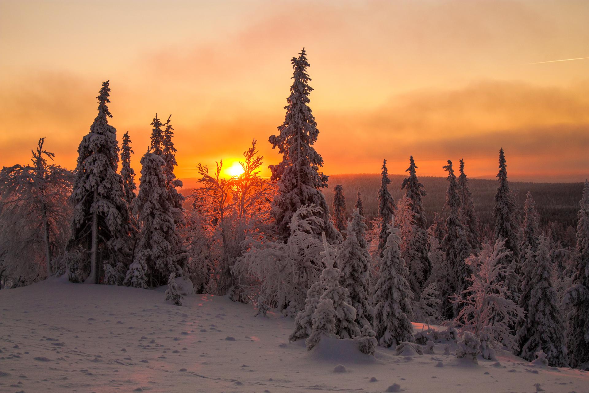вспышки находятся картинки зеленые ели зима снег закат дачного