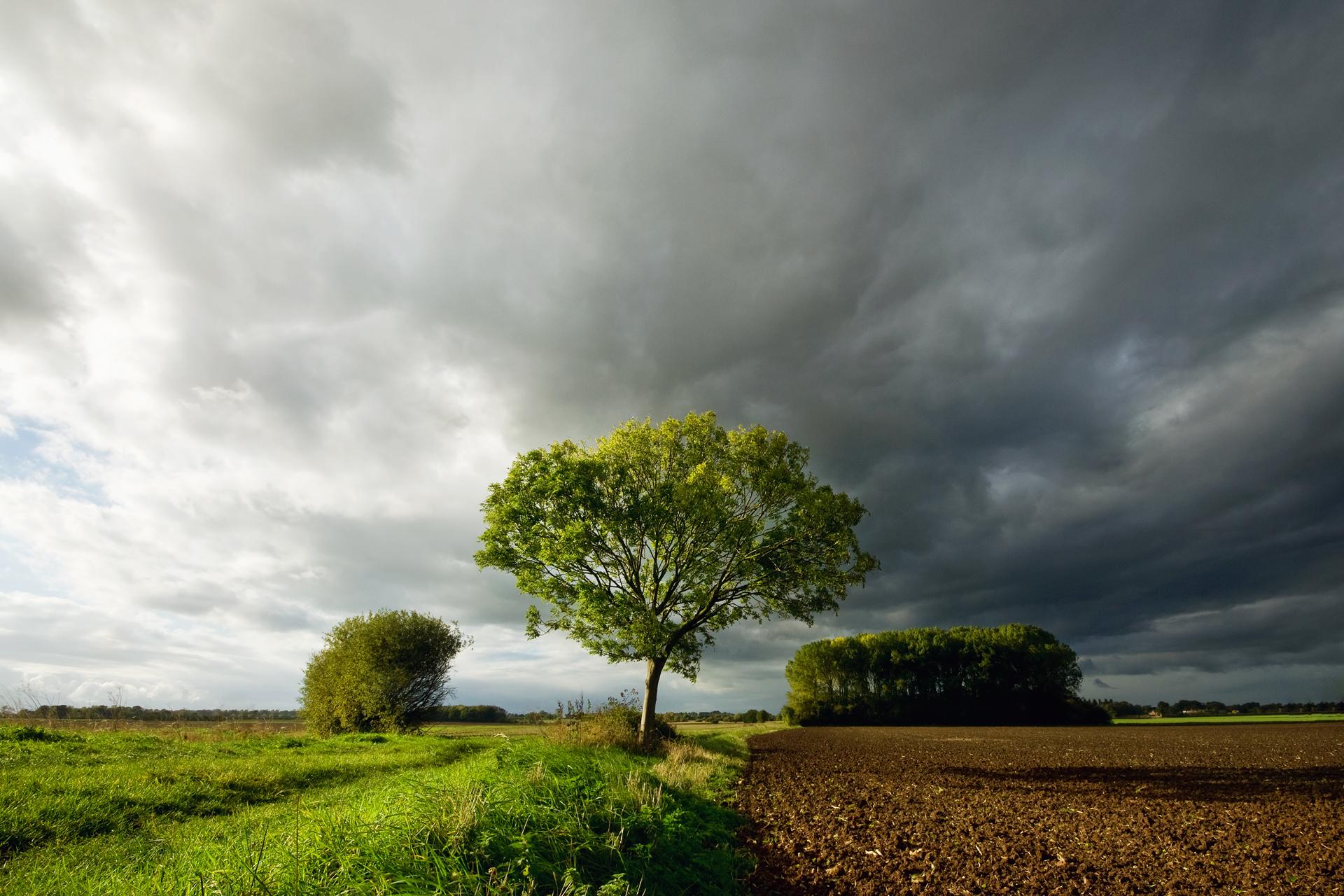дерево поле  № 439034 бесплатно