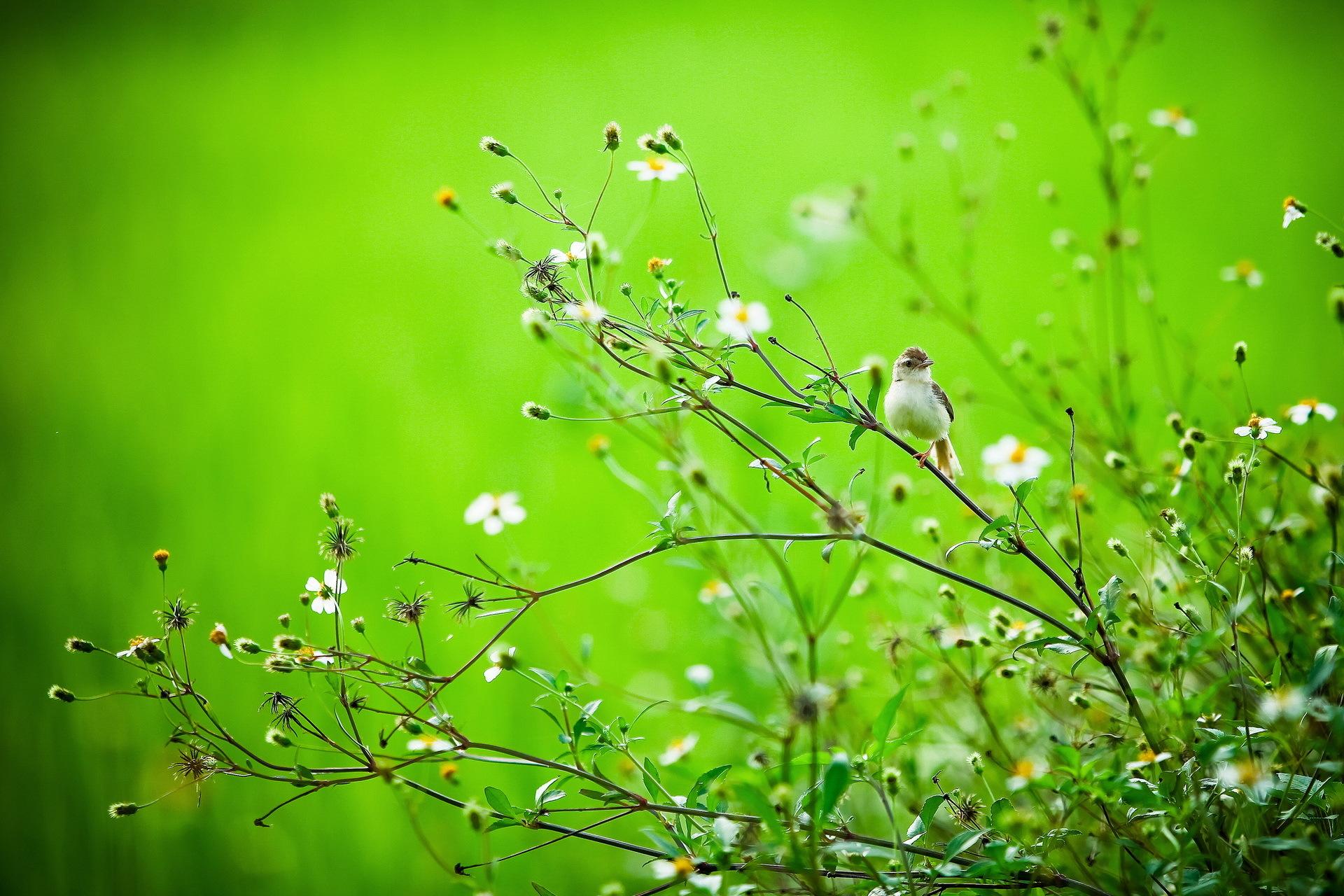 птичка ветка  № 1660333  скачать