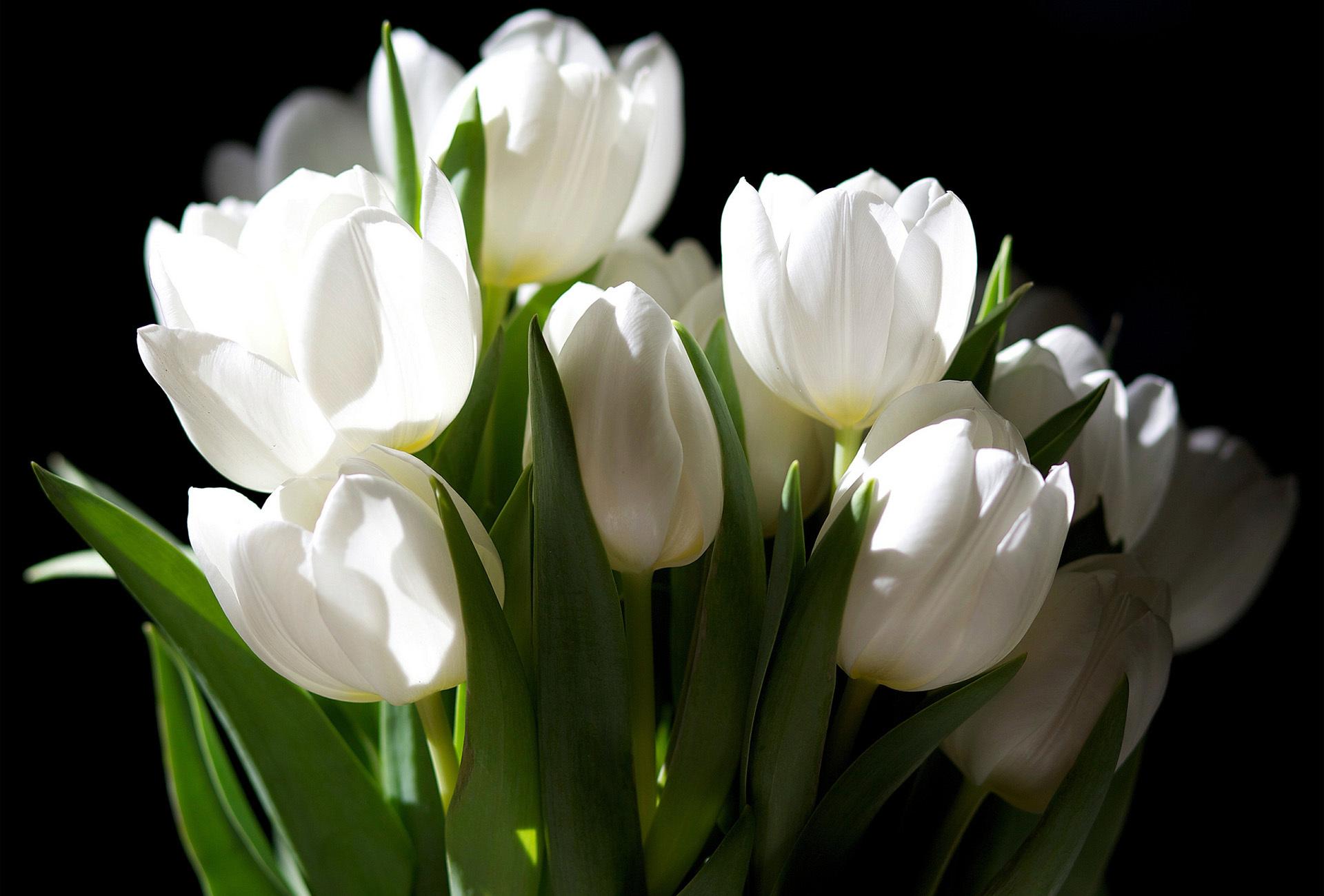 картинки с разрешением белые цветы свой провайдер всегда
