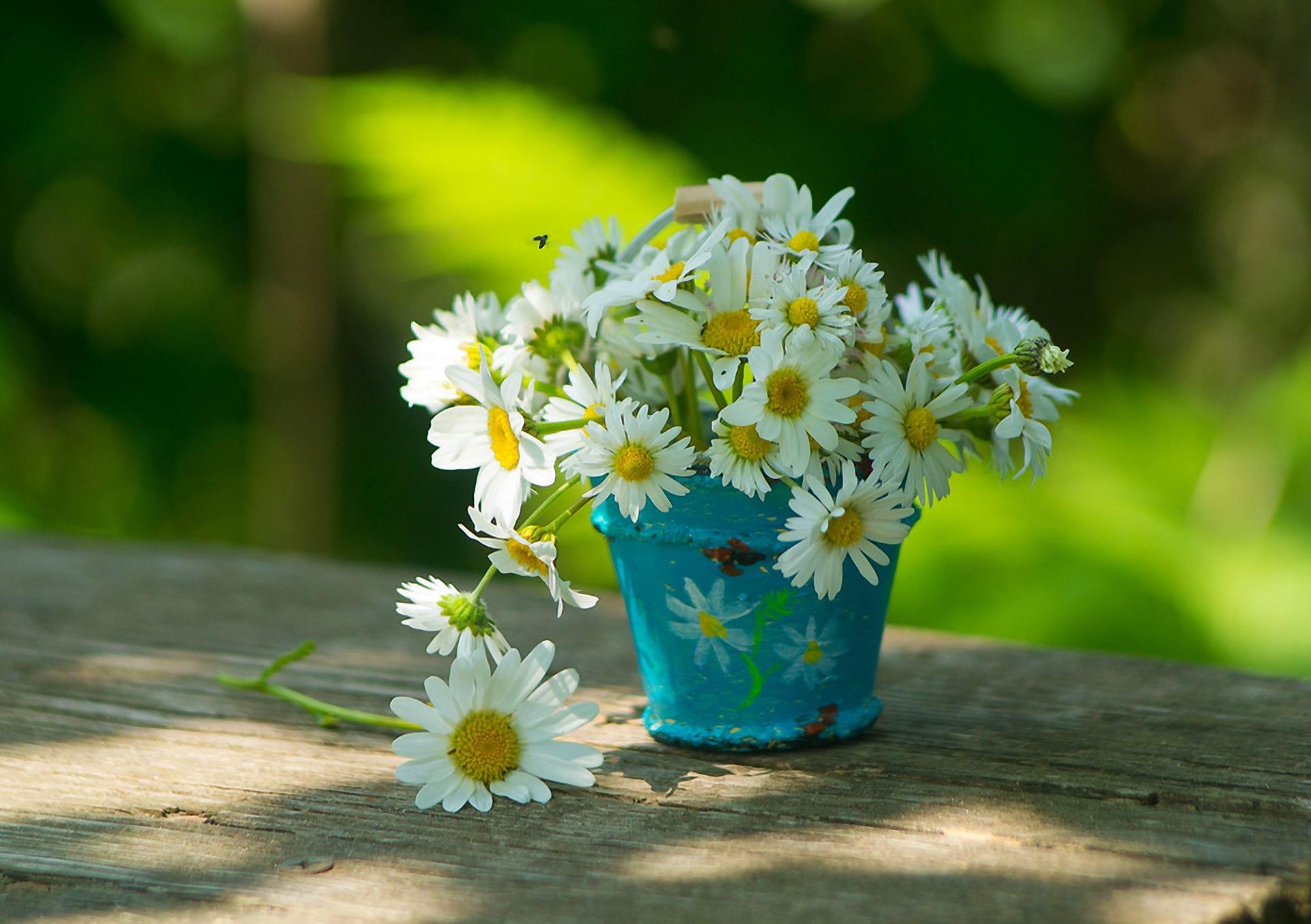 карьере красивые фотографии с цветами ромашки поздравляю
