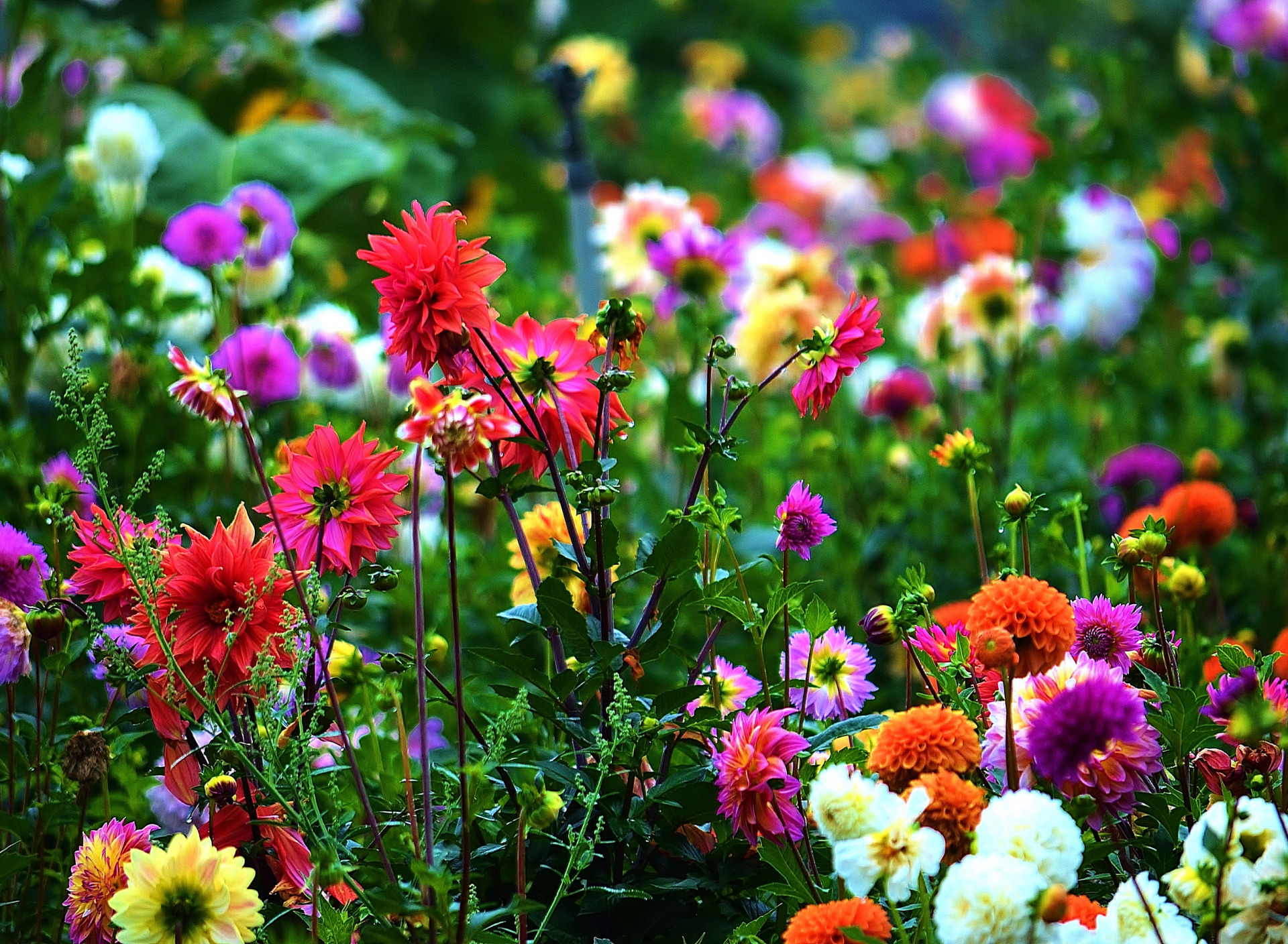 картинки для рабочего стола садовые цветы мост