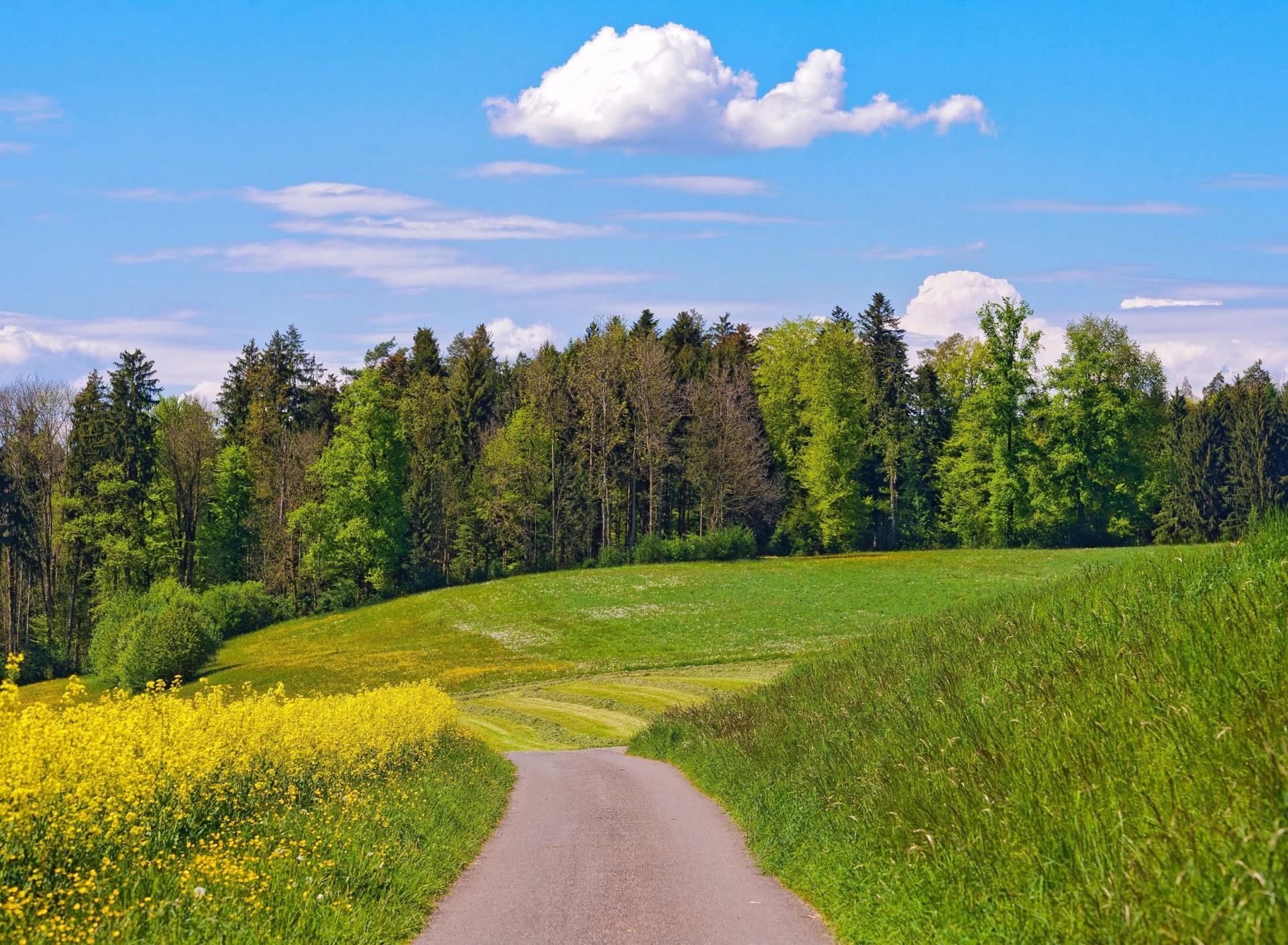 девушки появился открытки с полем и лесом лысьвенский