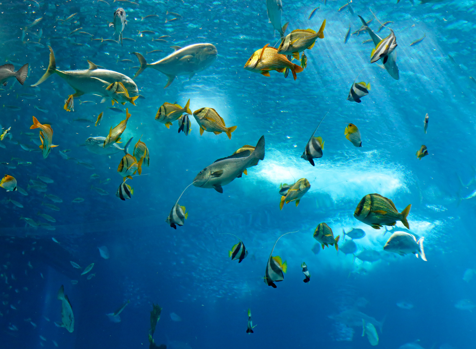сложилось, картинка рыбы плавают в воде соус чуть закончился