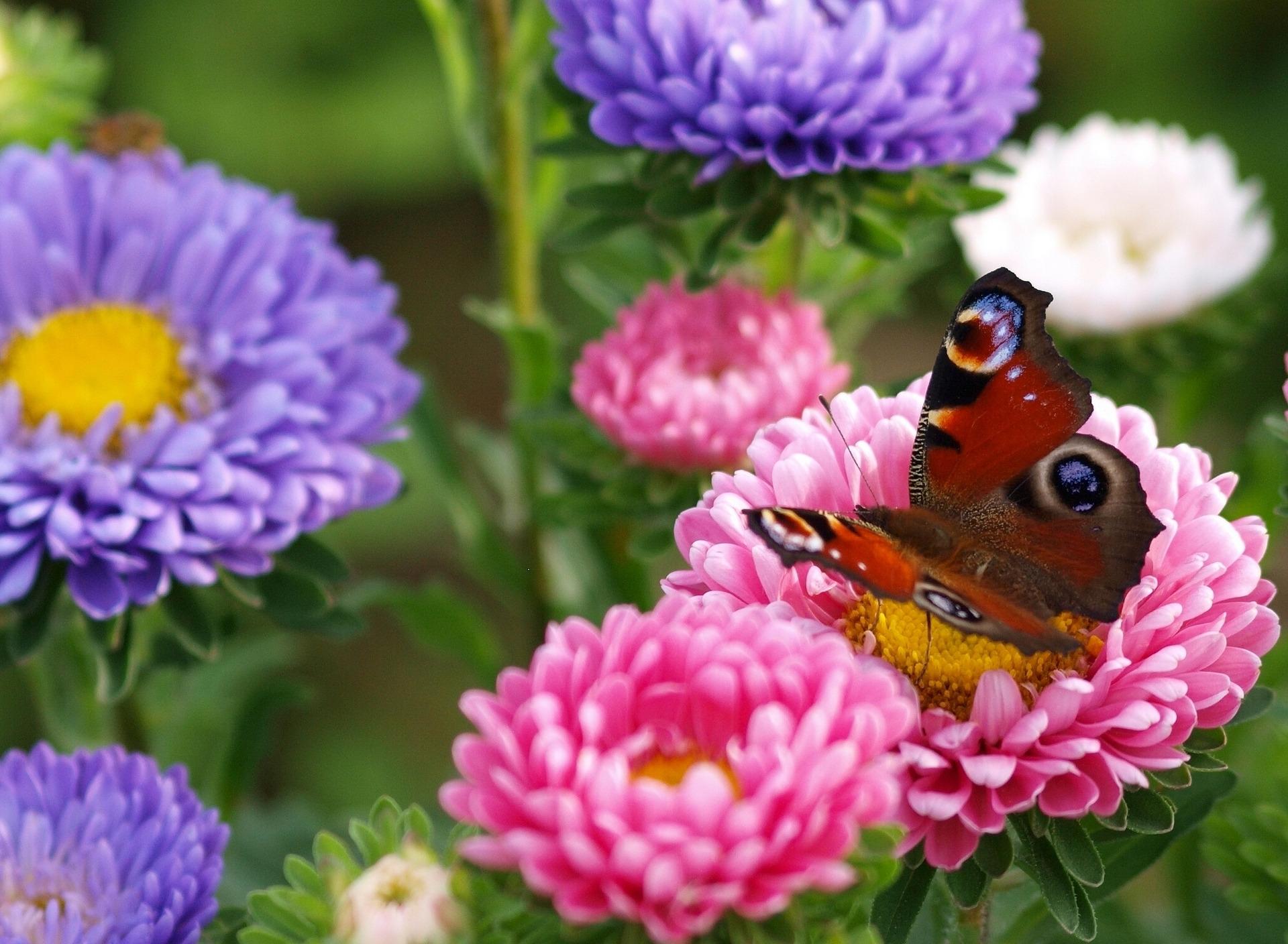 Картинка с изображением цветов и бабочек, день студентов мишки