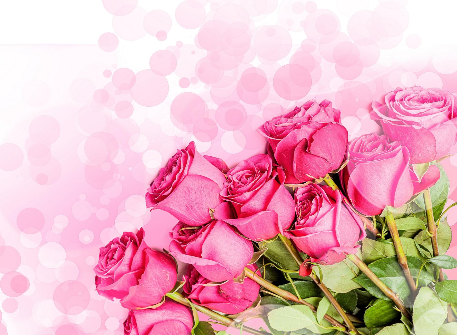 Розы розовые открытка