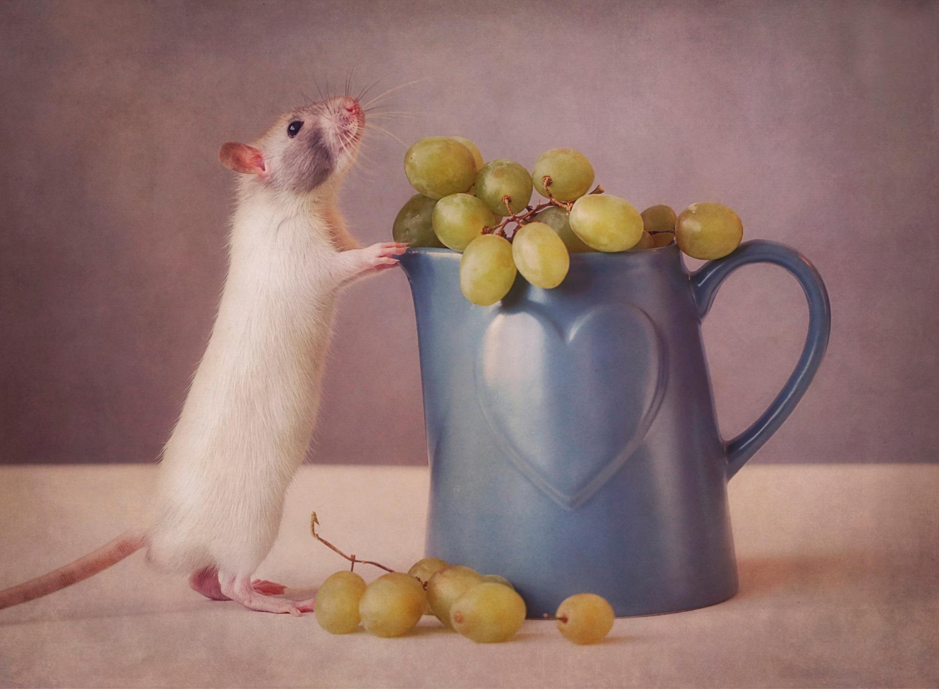 Смешные картинки с мышатами, смешные
