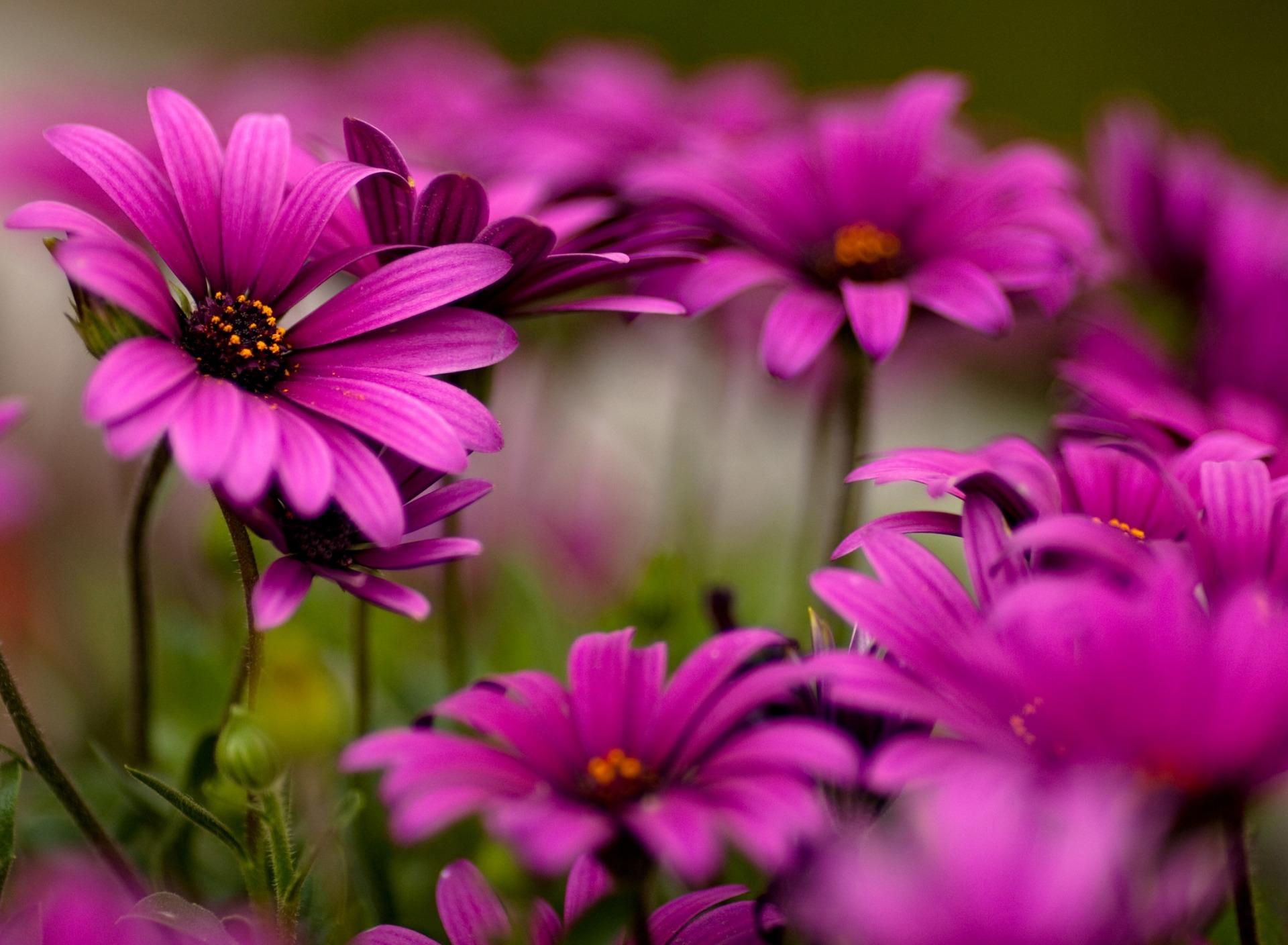 период картинки цветочки в отличном качестве было