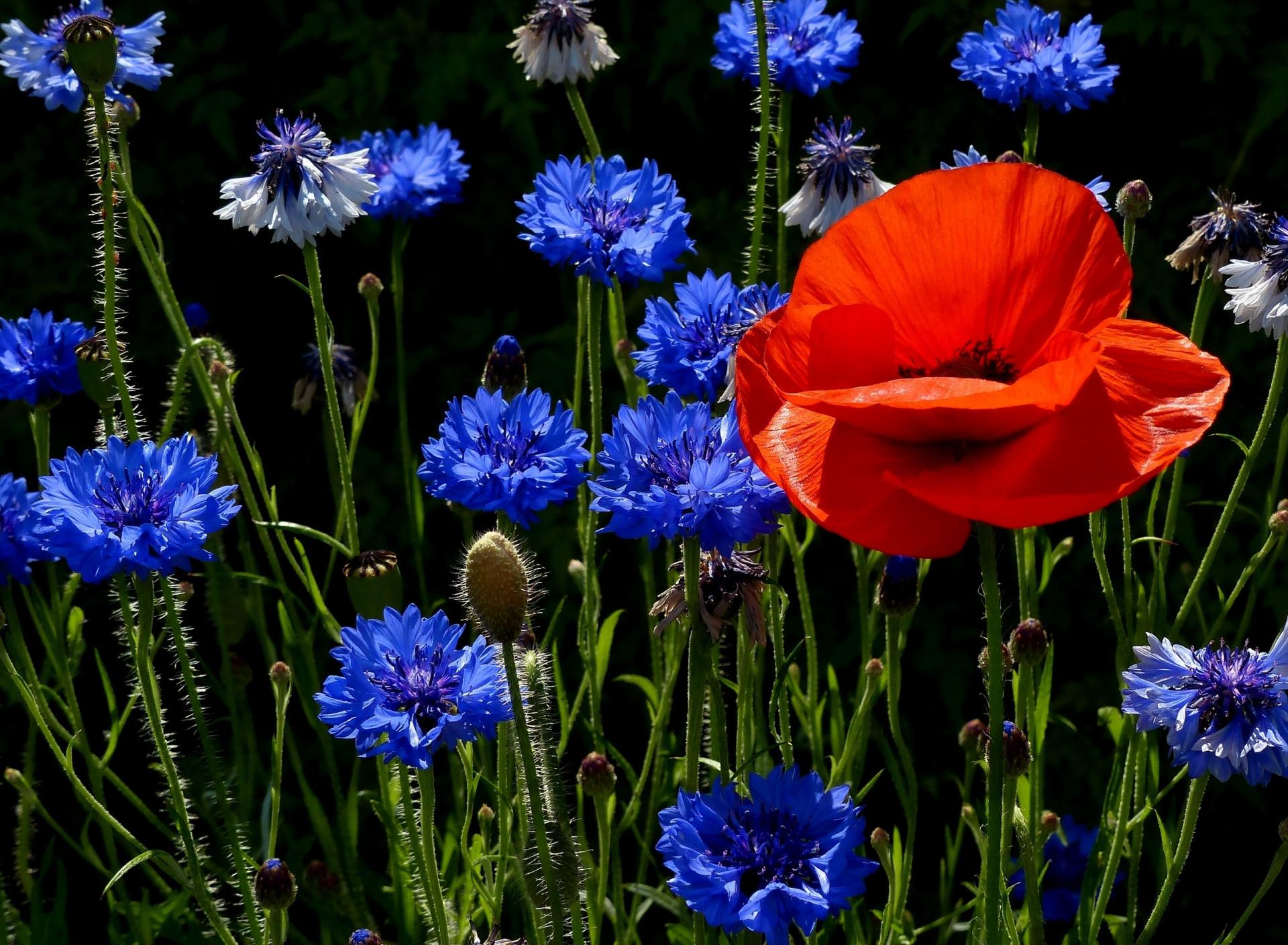 гуляющее красивые фото цветов в хорошем качестве браво отметит