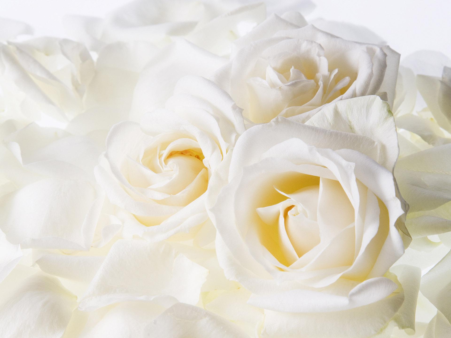 Картинки цветы светлых