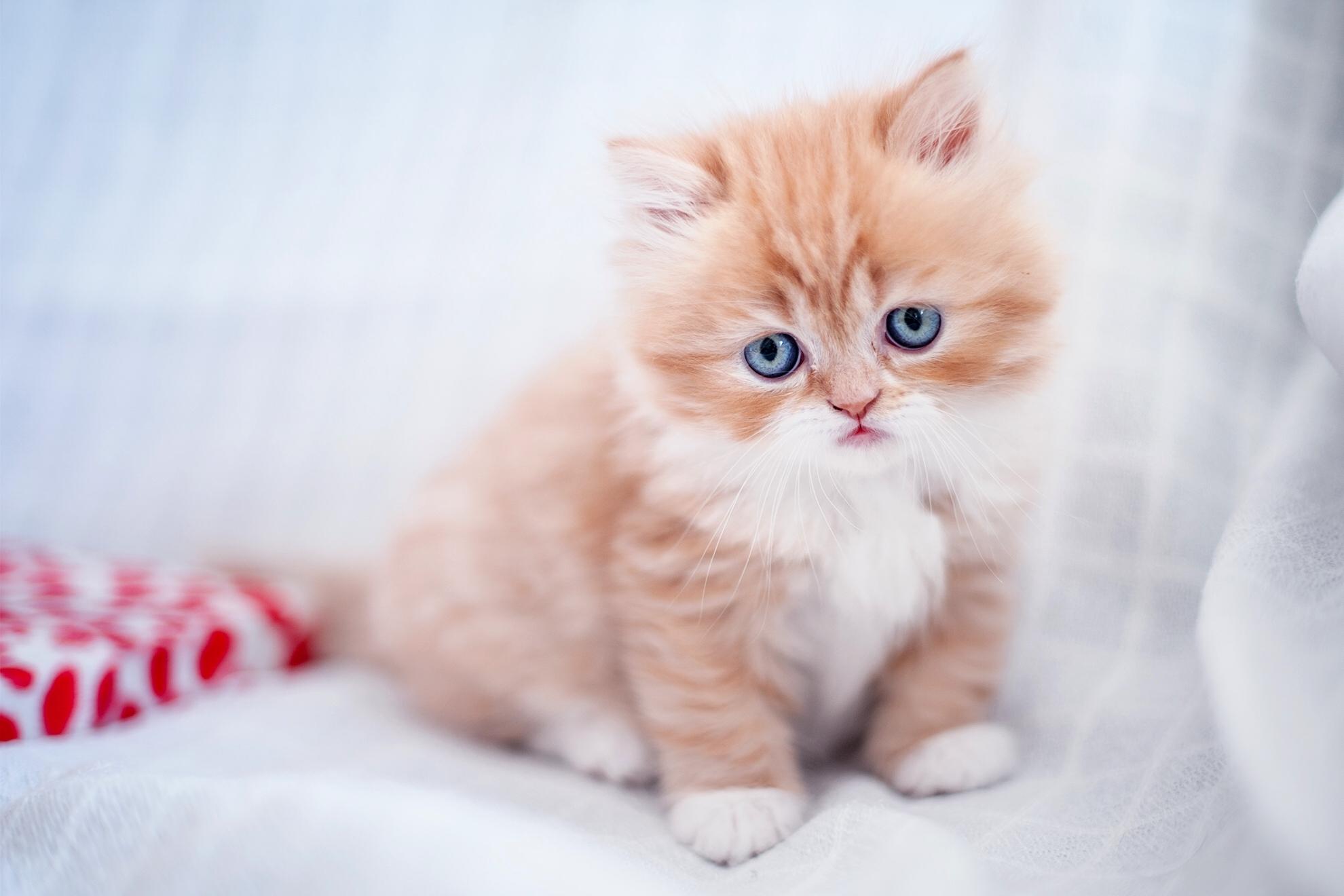 Рыжий котенок  № 1144349 бесплатно