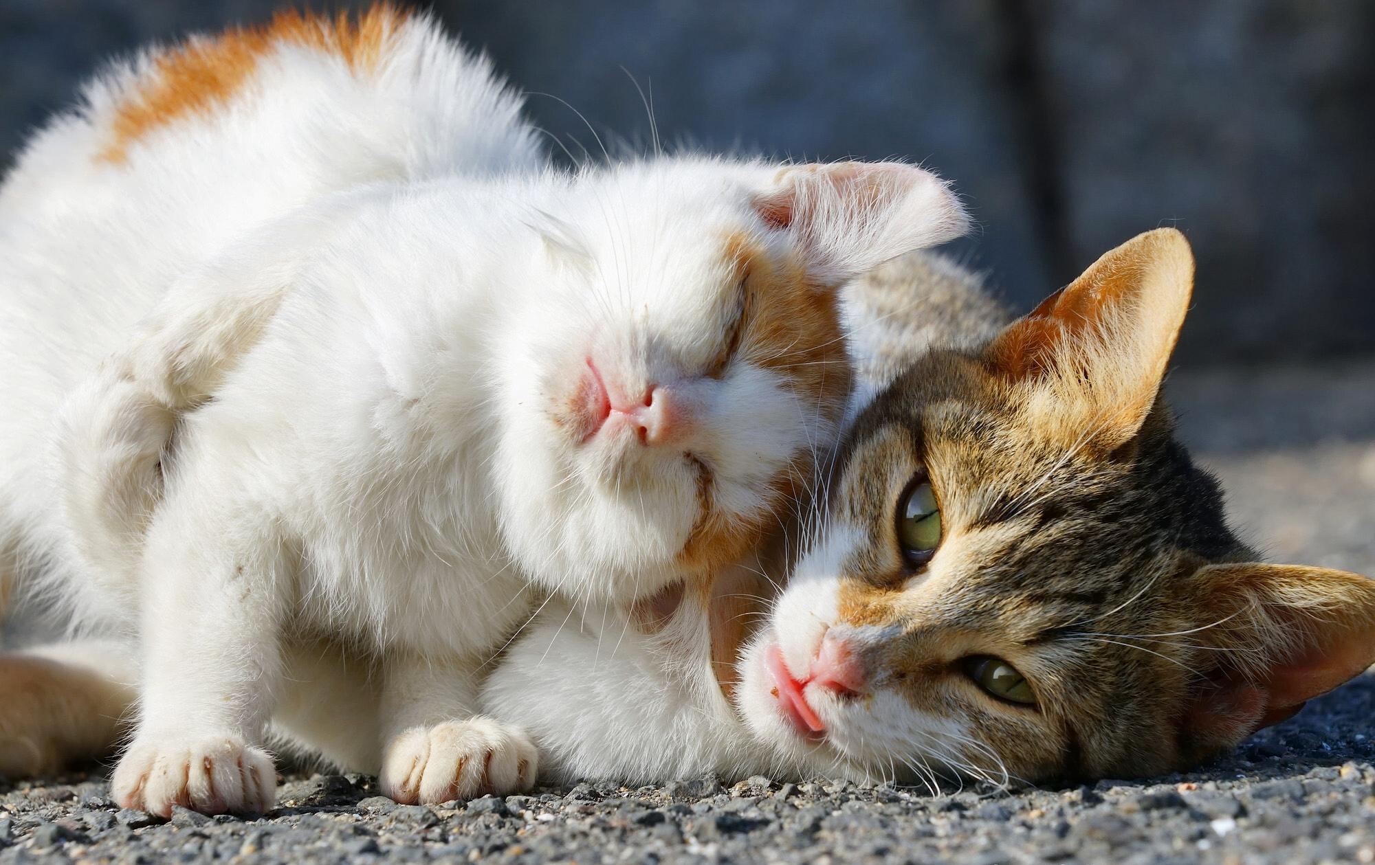 Котята обнимаются открытка
