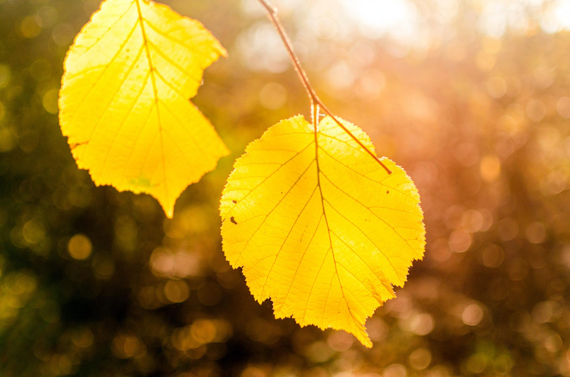 Пожелтевшие листья картинки для