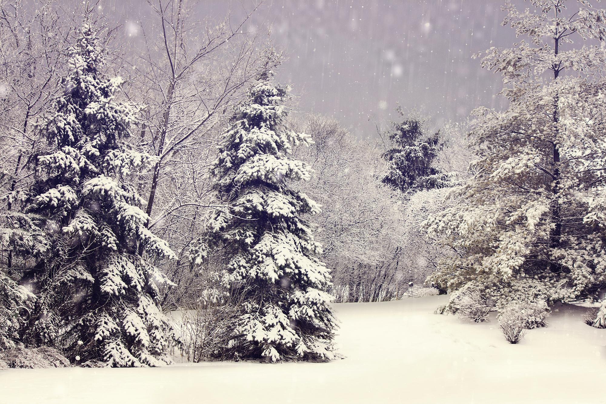 снег ветви лес snow branches forest  № 442857 бесплатно