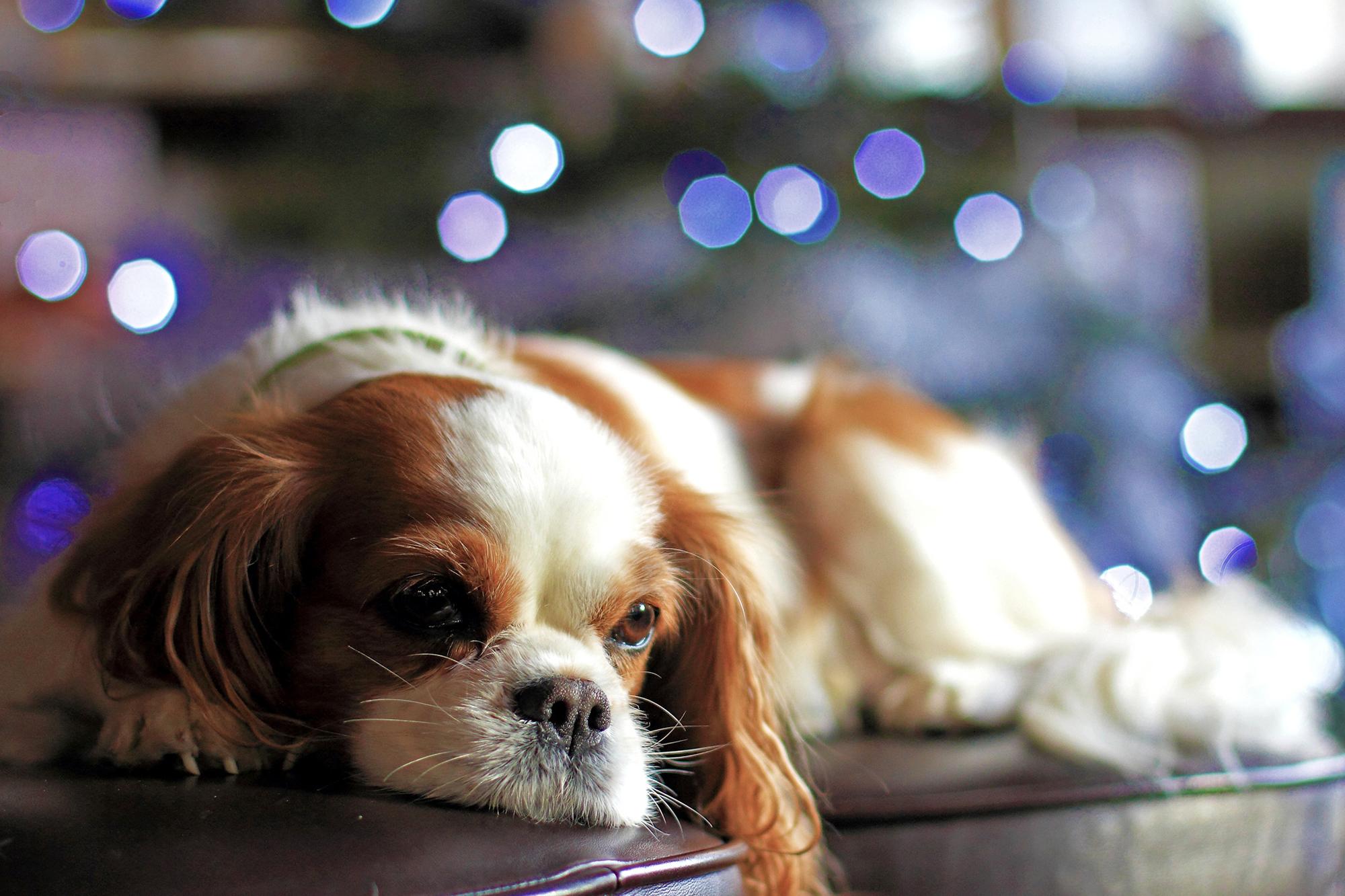 собака плитка свет  № 3646442 без смс