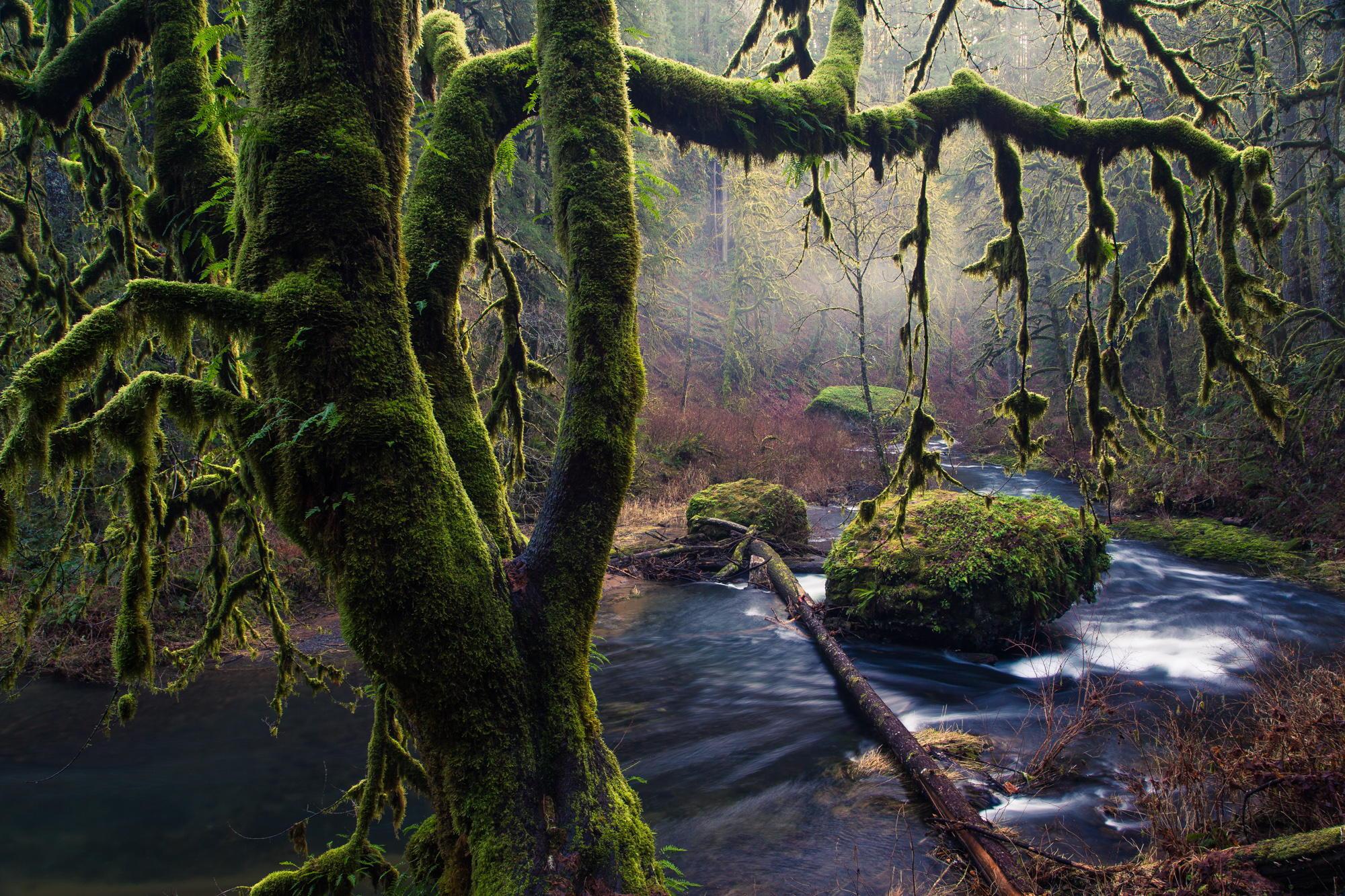 природа вода река трава деревья мох  № 3800947 без смс
